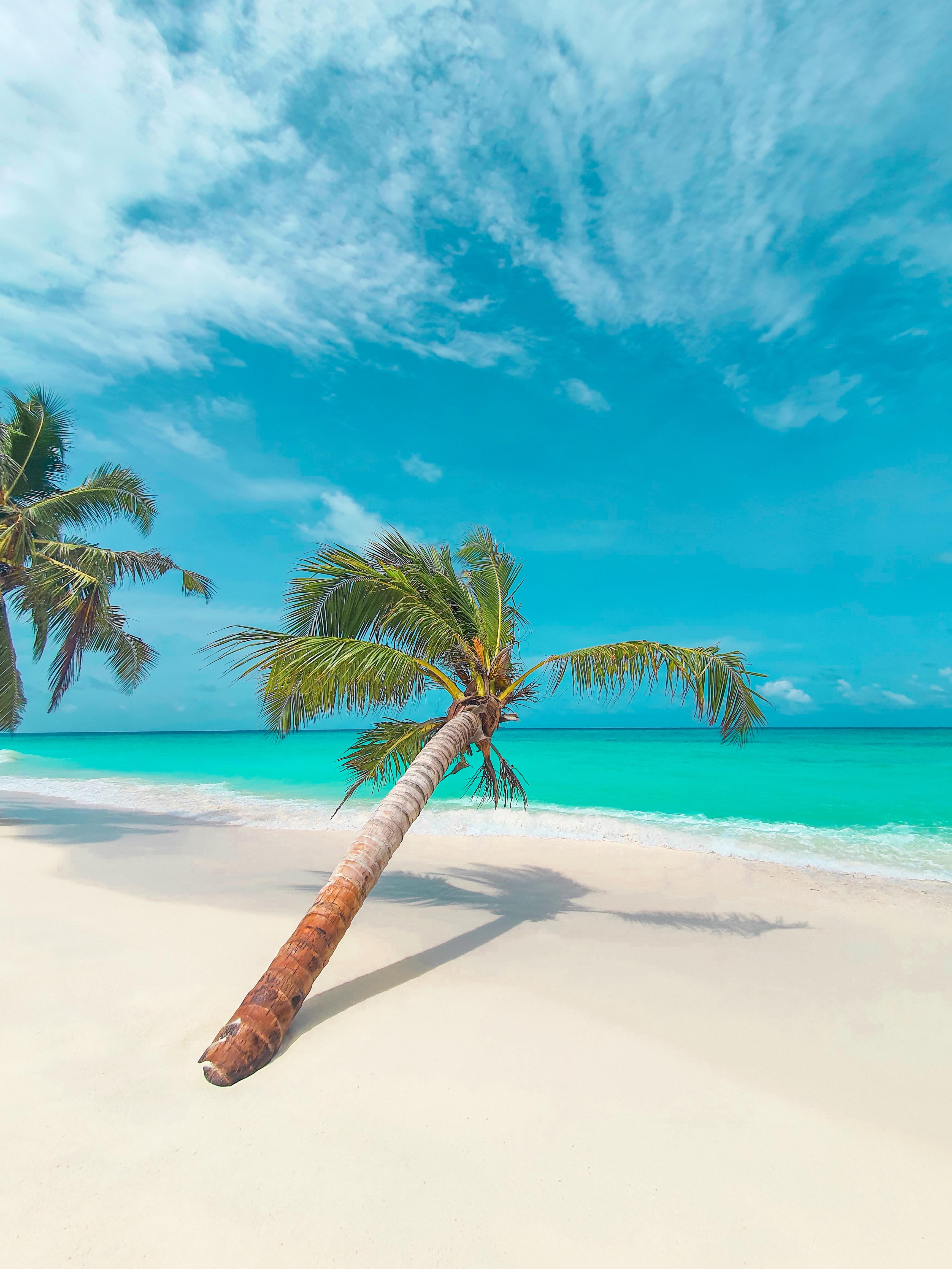 88472 Hintergrundbild herunterladen Strand, Natur, Blätter, Küste, Palme, Palm, Tropisch, Tropischen - Bildschirmschoner und Bilder kostenlos