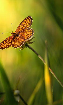 お使いの携帯電話の58253スクリーンセーバーと壁紙昆虫。 大きい, マクロ, バタフライ, 蝶, 昆虫, 褐色, 草の写真を無料でダウンロード