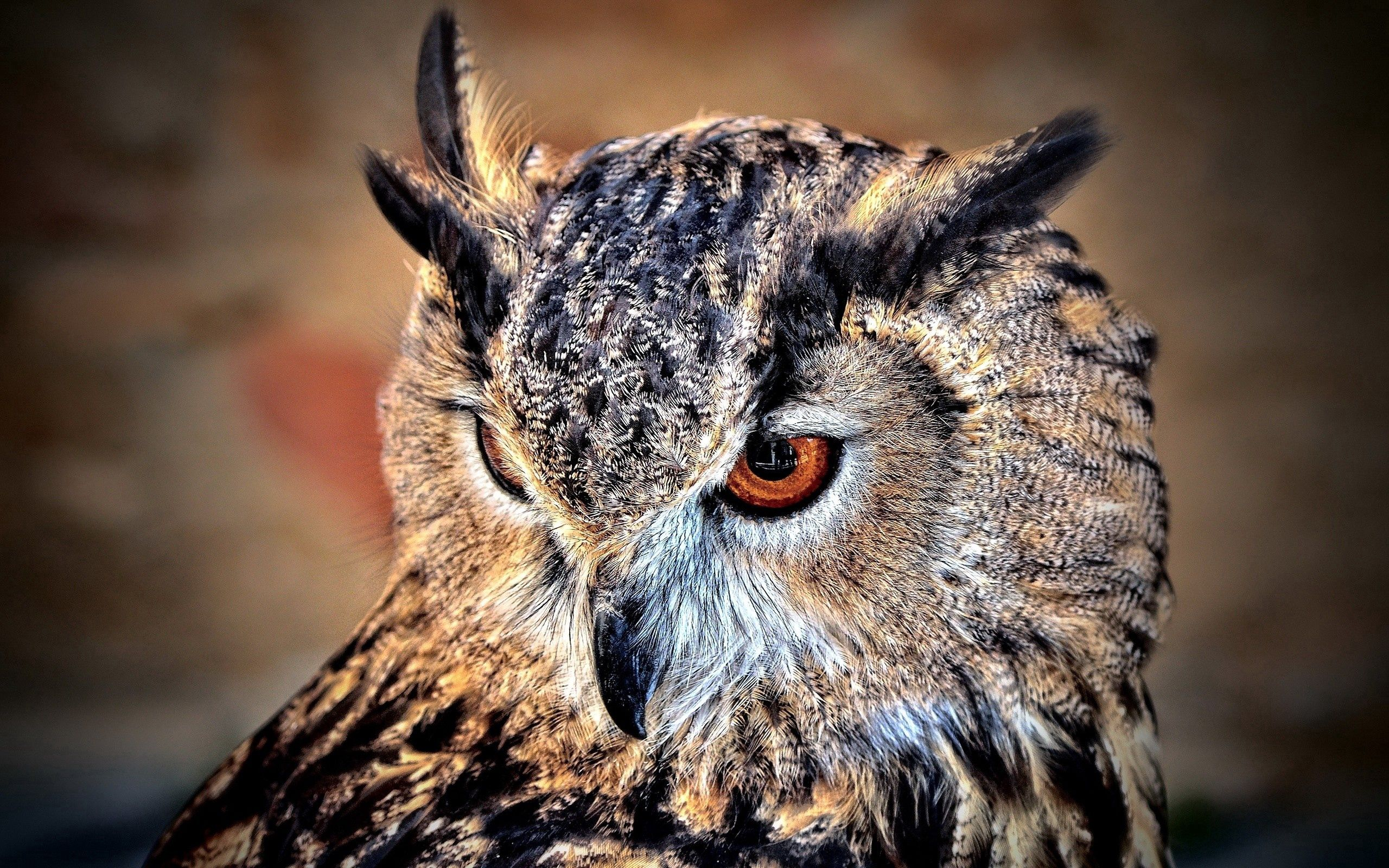 105213 Screensavers and Wallpapers Bird for phone. Download Animals, Owl, Bird, Predator, Sight, Opinion pictures for free