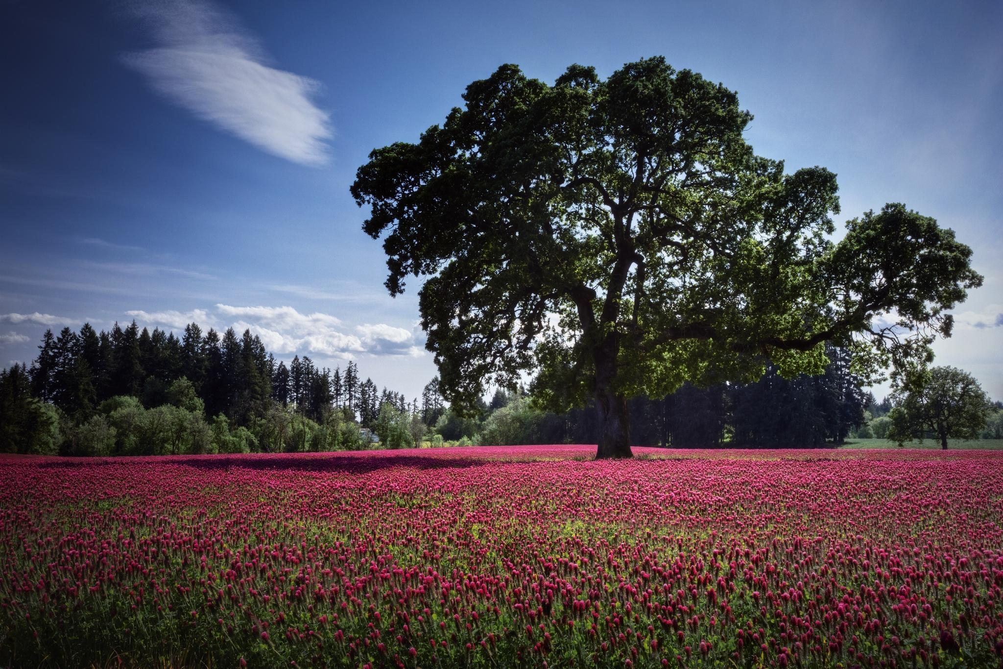 74114 免費下載壁紙 性质, 木头, 场地, 字段, 粉色的, 粉红色, 波利亚纳, 云, 云端, 景观, 花卉 屏保和圖片
