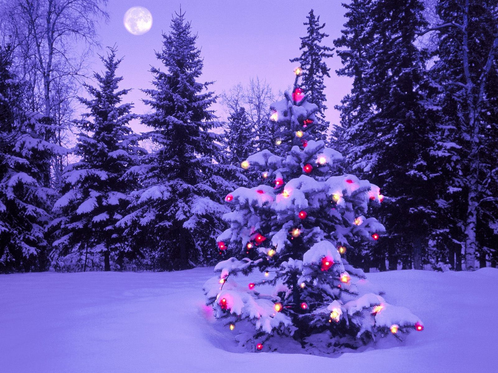 94062 Screensavers and Wallpapers New Year for phone. Download New Year, Holidays, Winter, Sky, Moon, Snow, Lights, Forest, Christmas, Evening, Christmas Tree, Garland pictures for free