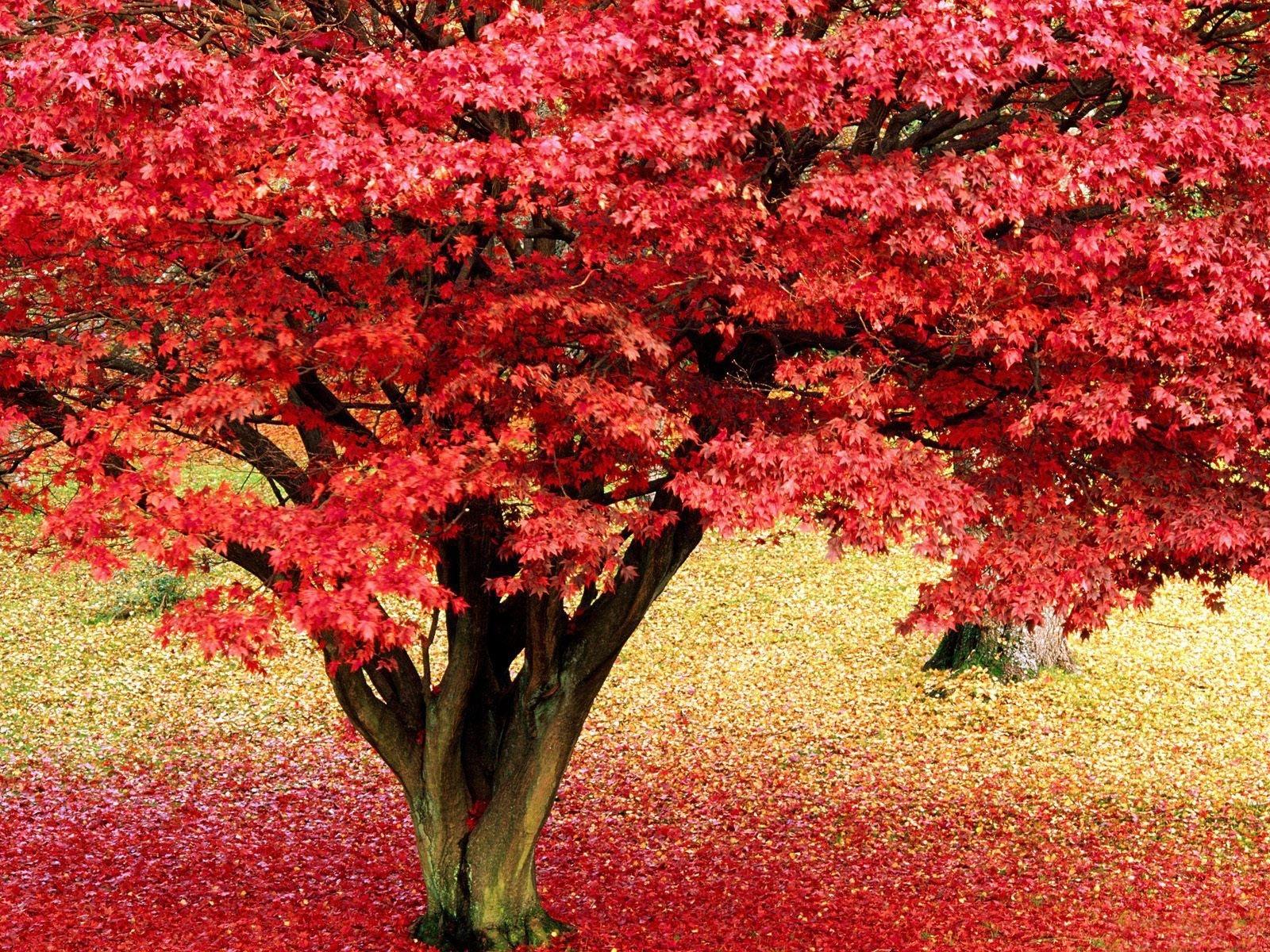 3736 скачать обои Пейзаж, Деревья, Осень, Листья - заставки и картинки бесплатно