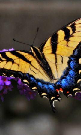 48502 Salvapantallas y fondos de pantalla Insectos en tu teléfono. Descarga imágenes de Mariposas, Insectos gratis