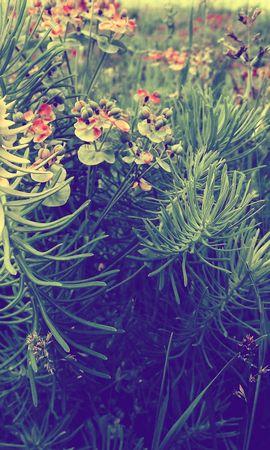 139812 скачать обои Макро, Растения, Трава, Цветы - заставки и картинки бесплатно