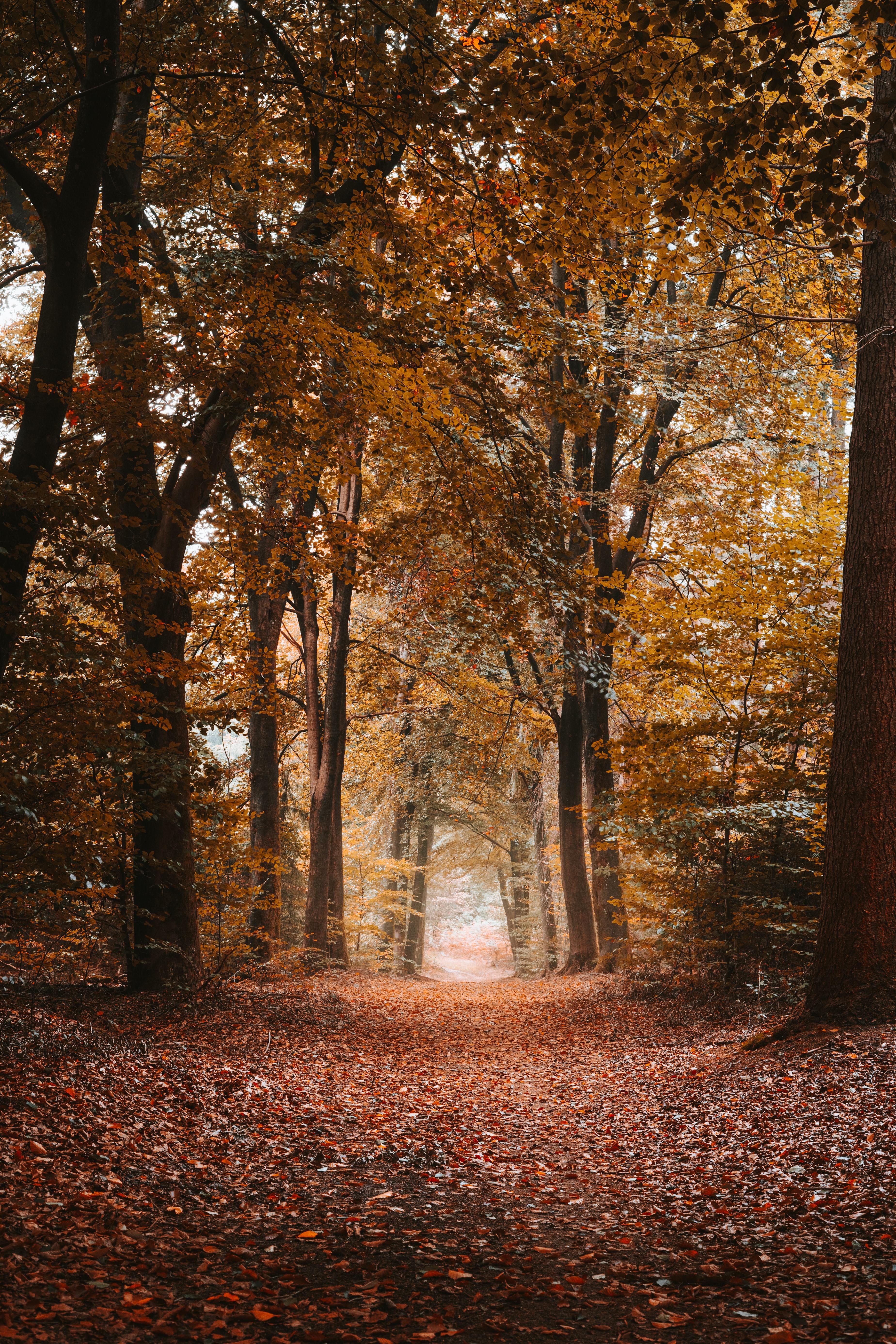 109025 Hintergrundbild herunterladen Herbst, Natur, Bäume, Gasse, Pfad, Laub, Dahl, Distanz - Bildschirmschoner und Bilder kostenlos