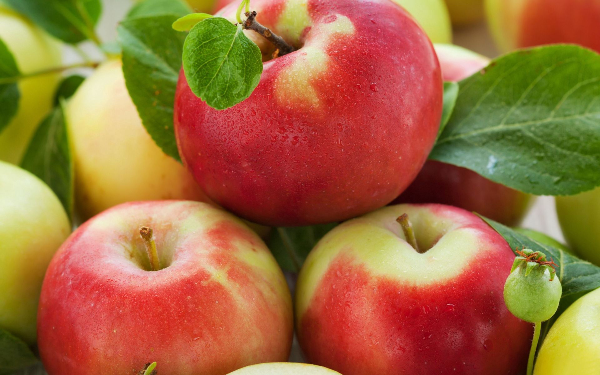 149936 Screensavers and Wallpapers Fruits for phone. Download Food, Ripe, Fruits, Apples pictures for free
