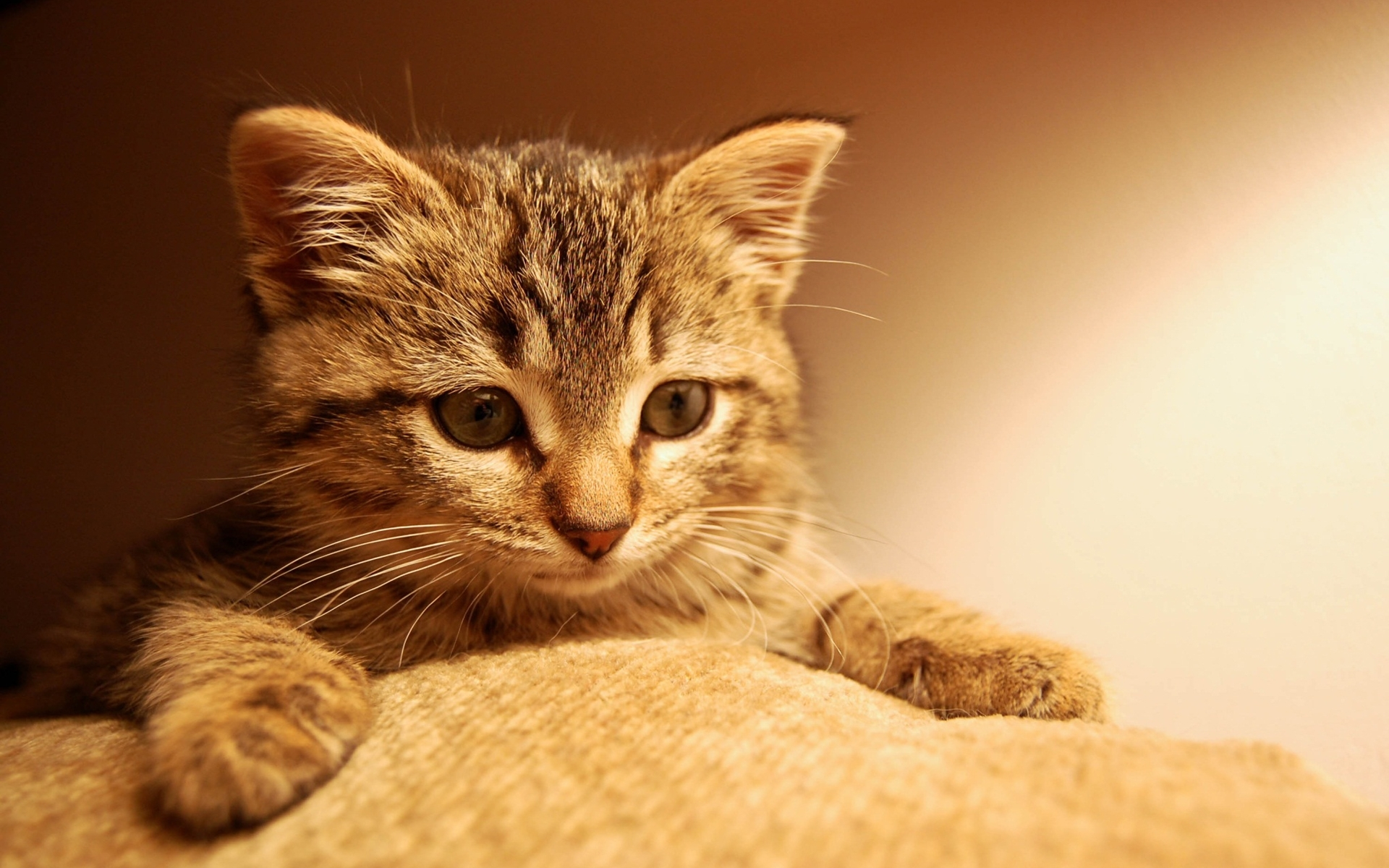 49222 download wallpaper Animals, Cats screensavers and pictures for free
