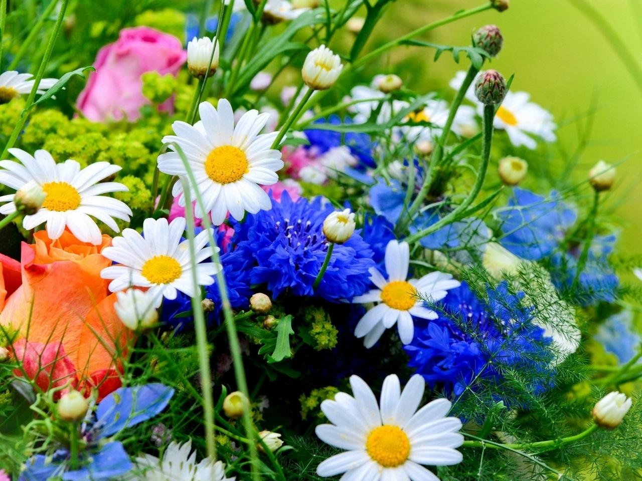 48081 скачать обои Растения, Цветы - заставки и картинки бесплатно