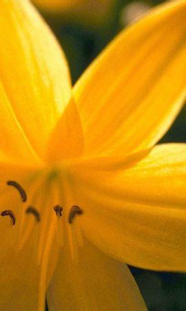 8804 скачать обои Растения, Цветы - заставки и картинки бесплатно