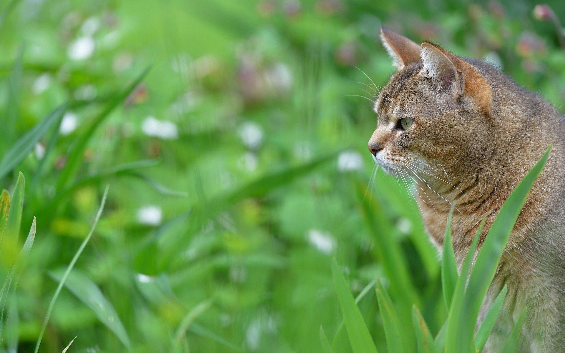155975 скачать обои Животные, Кот, Морда, Профиль, Трава - заставки и картинки бесплатно