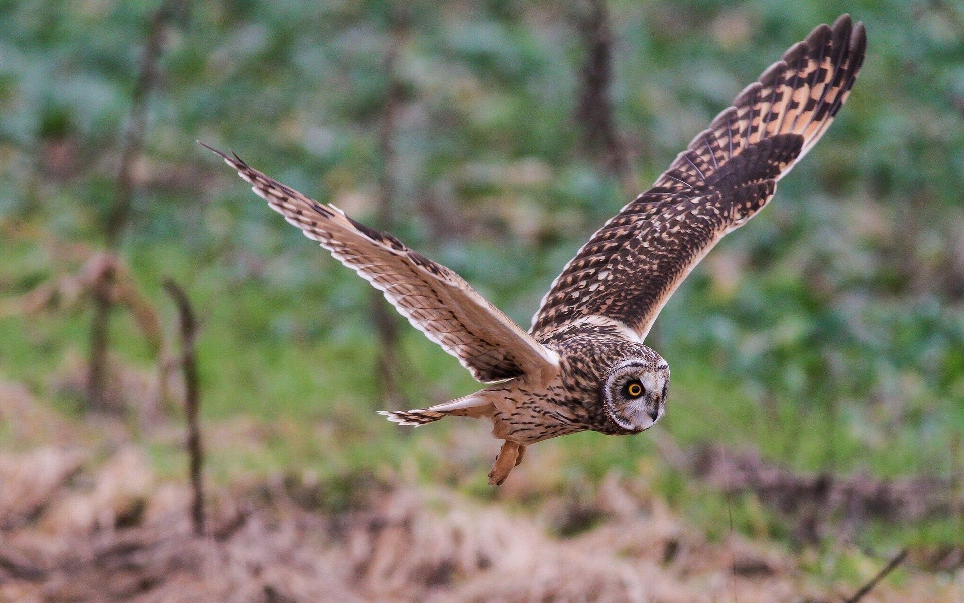 143431 Hintergrundbild herunterladen Eule, Tiere, Vogel, Welle, Fegen - Bildschirmschoner und Bilder kostenlos