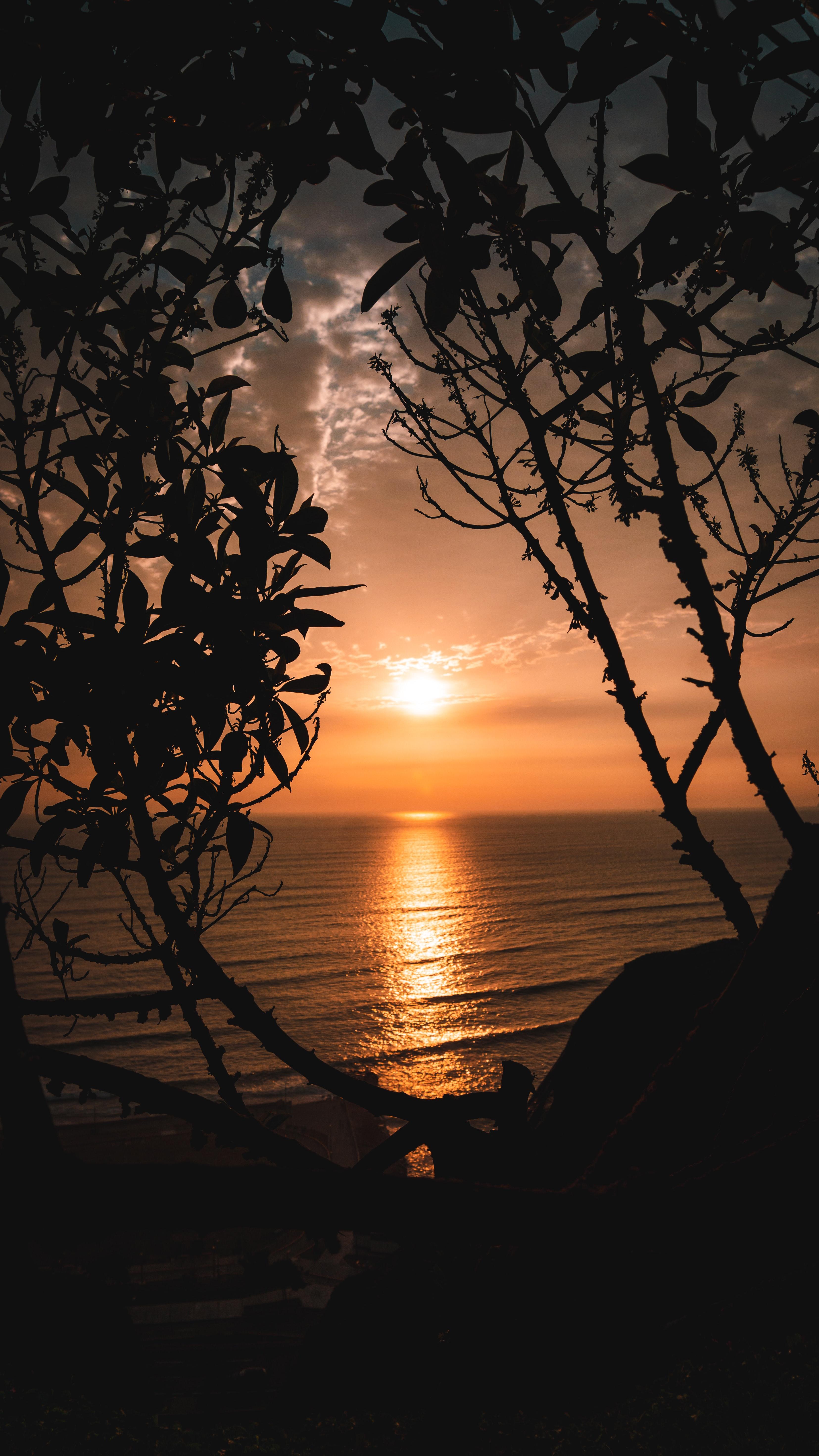 56072 скачать обои Закат, Солнце, Природа, Деревья, Горизонт, Ветки - заставки и картинки бесплатно