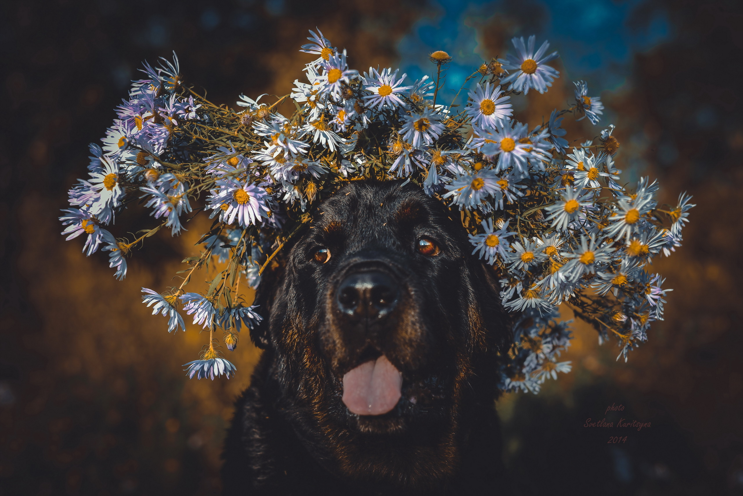 112765 download wallpaper Animals, Dog, Protruding Tongue, Tongue Stuck Out, Muzzle, Wreath, Flowers screensavers and pictures for free