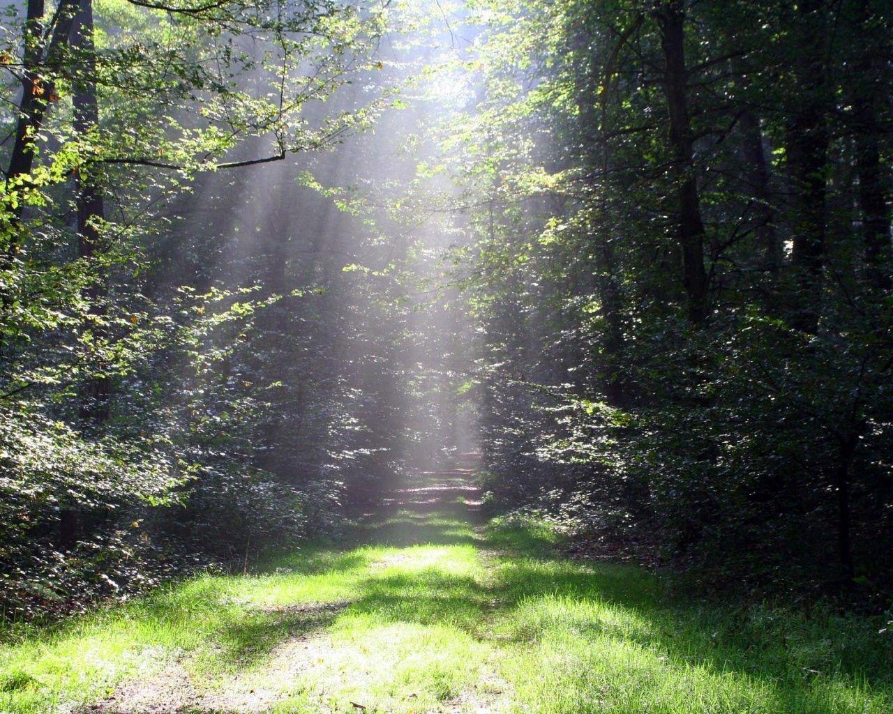 154120壁紙のダウンロード自然, 輝く, 光, ビーム, 光線, トレイル, パス, 木, 草, 森林, 森, グリーンズ, 菜, サン-スクリーンセーバーと写真を無料で