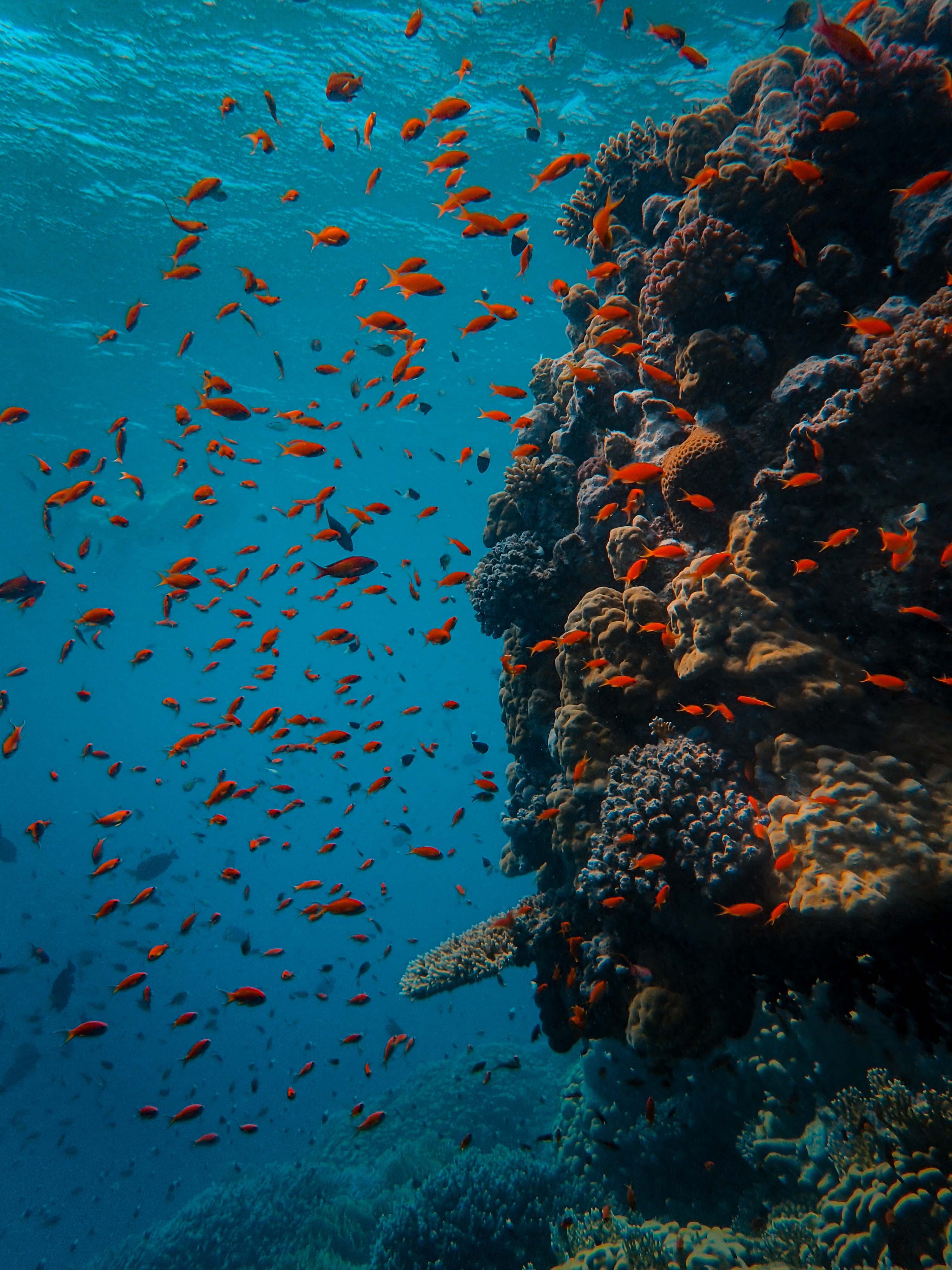 100123 download wallpaper Animals, Fishes, Ocean, Underwater World, Coral Reef screensavers and pictures for free