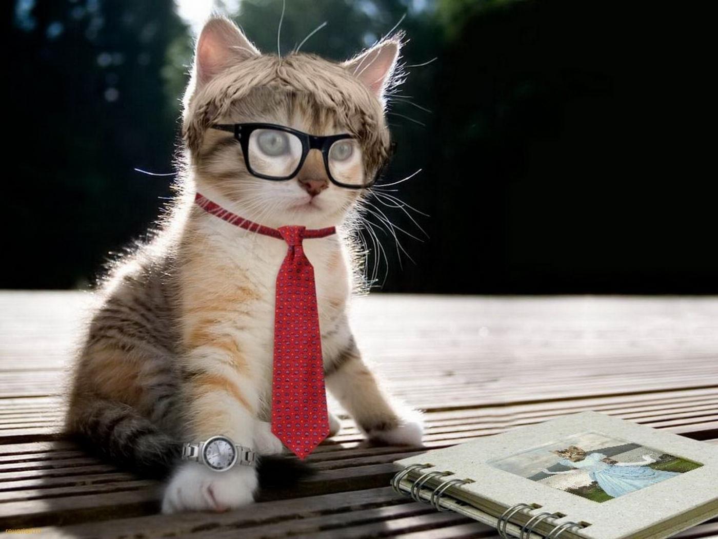 28437 Bildschirmschoner und Hintergrundbilder Humor auf Ihrem Telefon. Laden Sie Humor, Tiere, Katzen Bilder kostenlos herunter