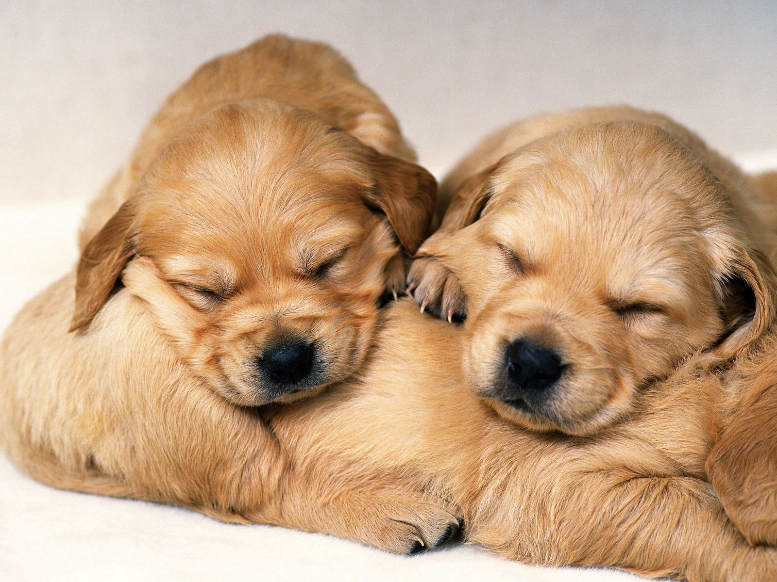 138617 download wallpaper Animals, Puppies, Dog, Couple, Pair, Redhead, Sleep screensavers and pictures for free