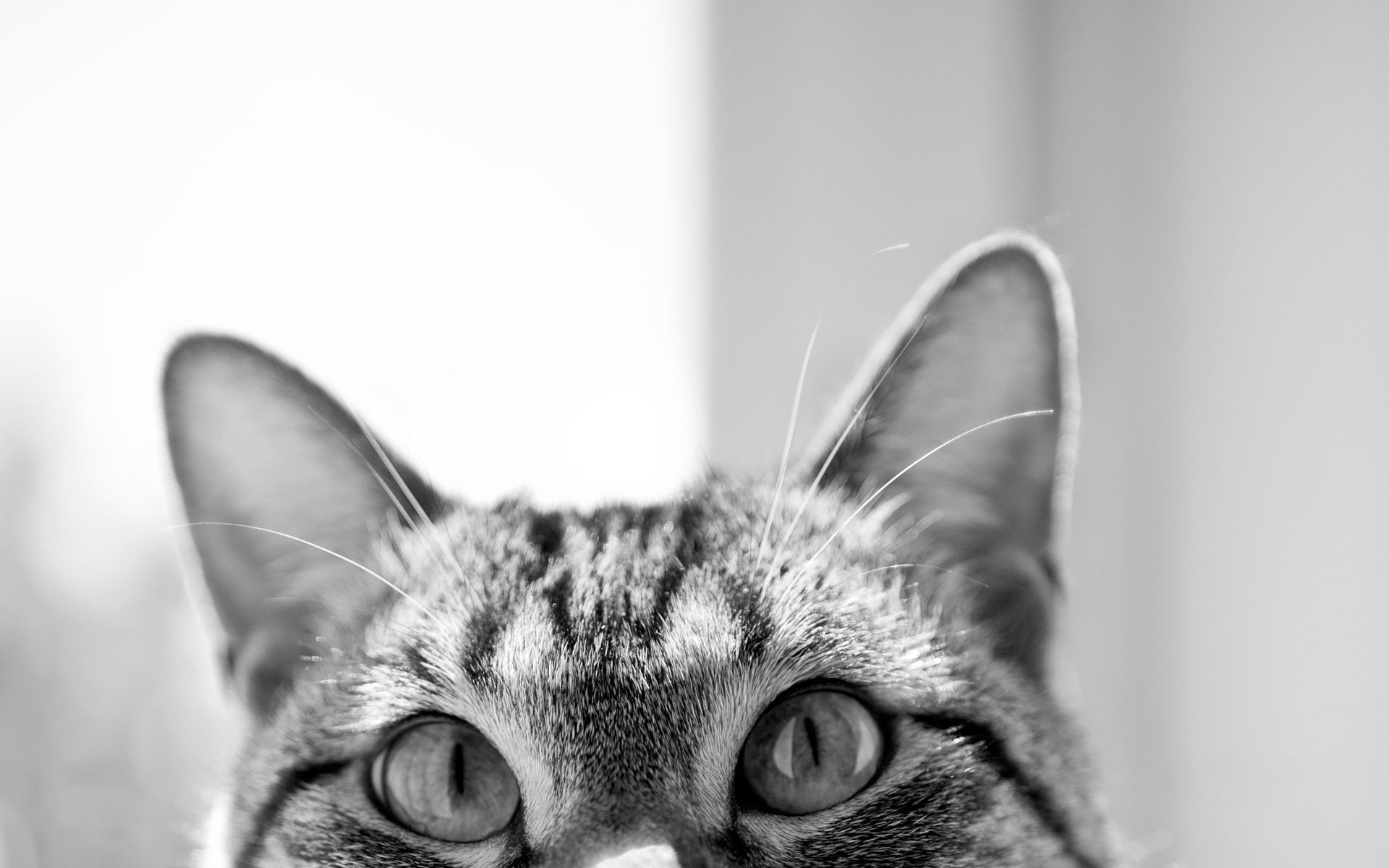 108117 download wallpaper Animals, Cat, Muzzle, Hide, Sight, Opinion, Ears, Lurk screensavers and pictures for free