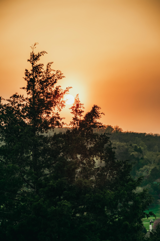 149615 скачать обои Природа, Деревья, Небо, Лучи, Солнце - заставки и картинки бесплатно