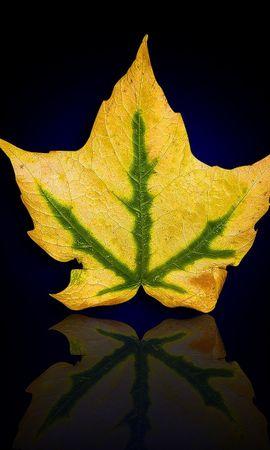 428 скачать обои Растения, Фон, Листья - заставки и картинки бесплатно