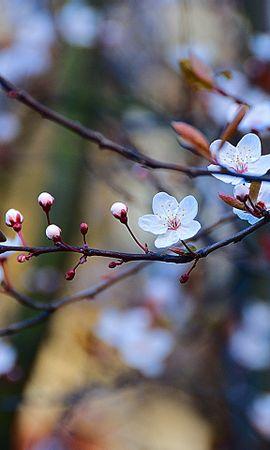 48529 скачать обои Растения, Цветы - заставки и картинки бесплатно