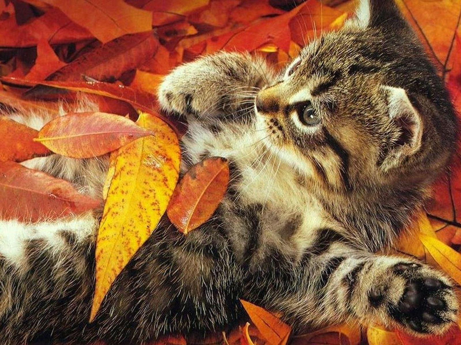 20232 download wallpaper Animals, Cats screensavers and pictures for free