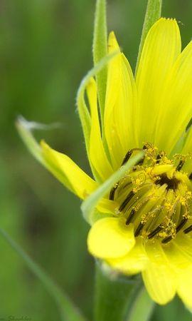 39157 descargar fondo de pantalla Plantas, Flores: protectores de pantalla e imágenes gratis