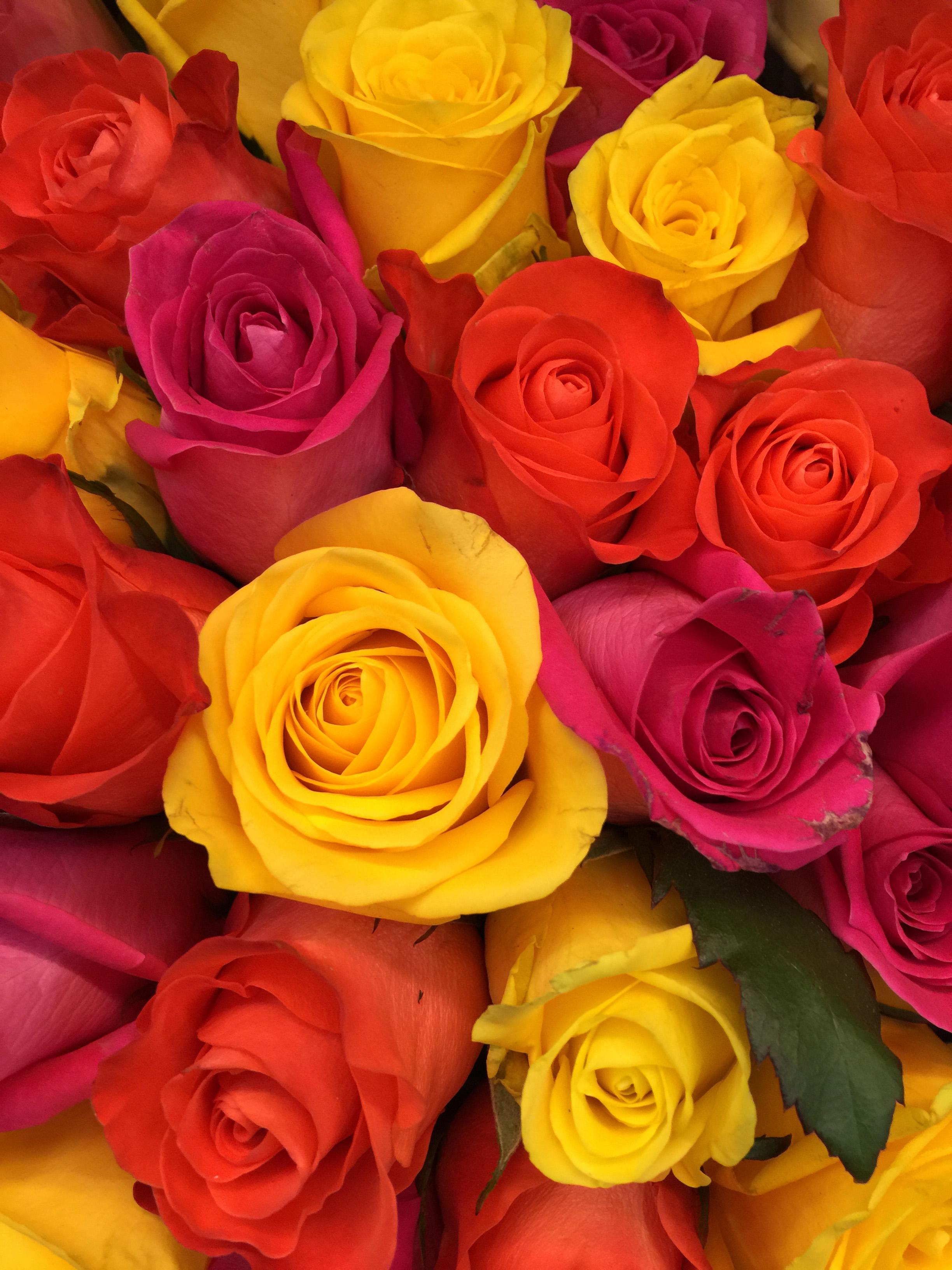 104071 скачать обои Розы, Цветы, Красный, Букет, Розовый, Желтый, Бутоны, Композиция, Флористика - заставки и картинки бесплатно