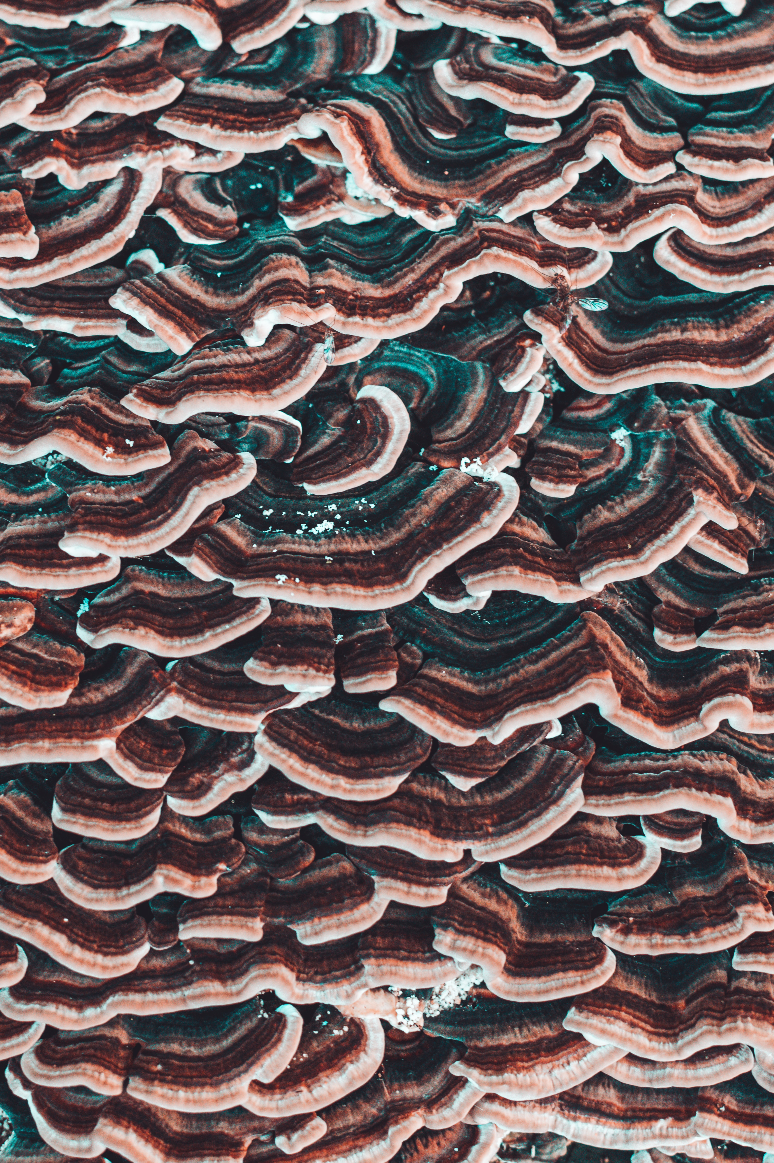 148960 Screensavers and Wallpapers Mashrooms for phone. Download Mashrooms, Macro, Texture, Textures, Close-Up, Surface pictures for free