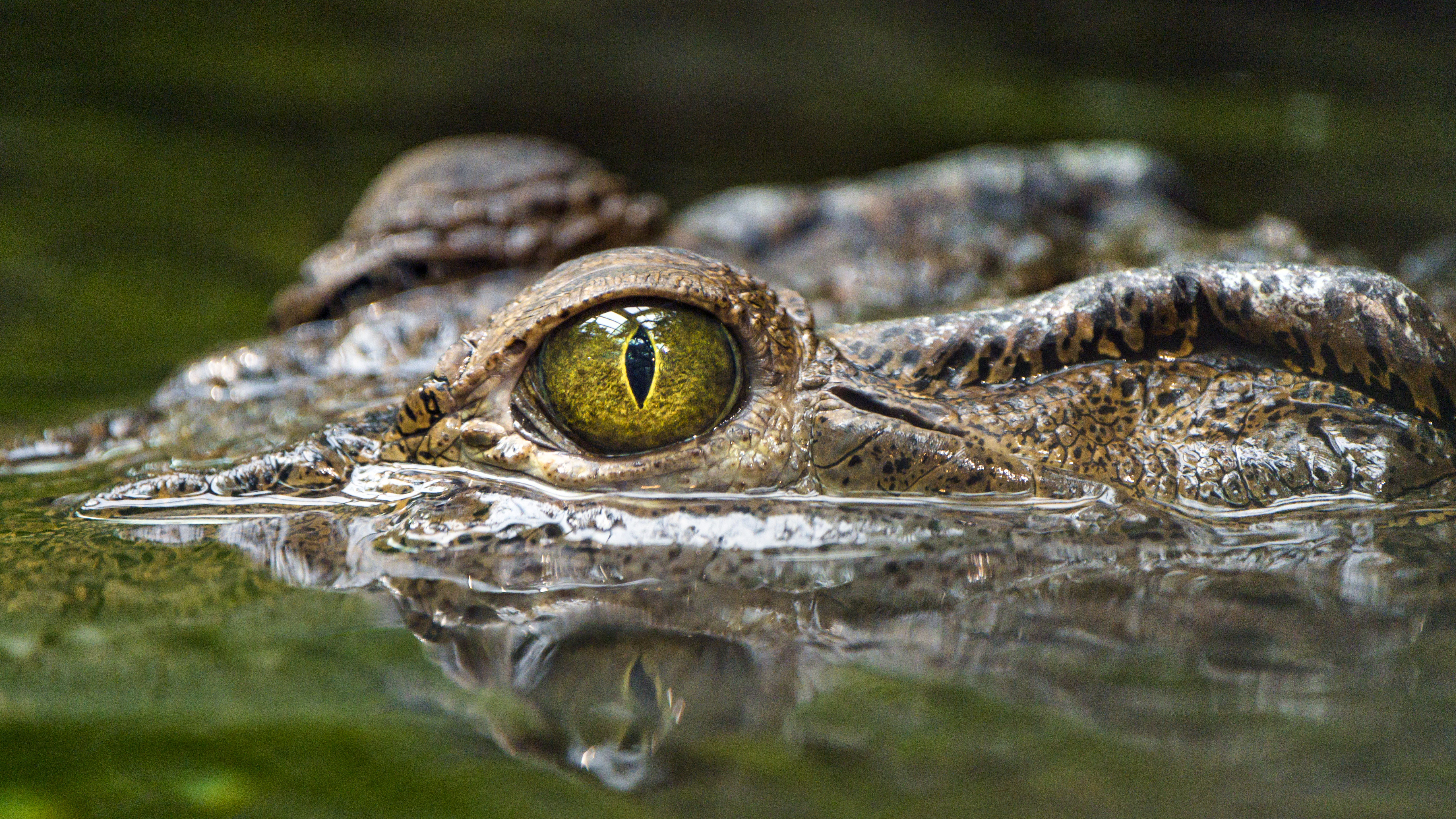 131638 download wallpaper Animals, Crocodile, Eye, Predator, Reptiles, Water screensavers and pictures for free