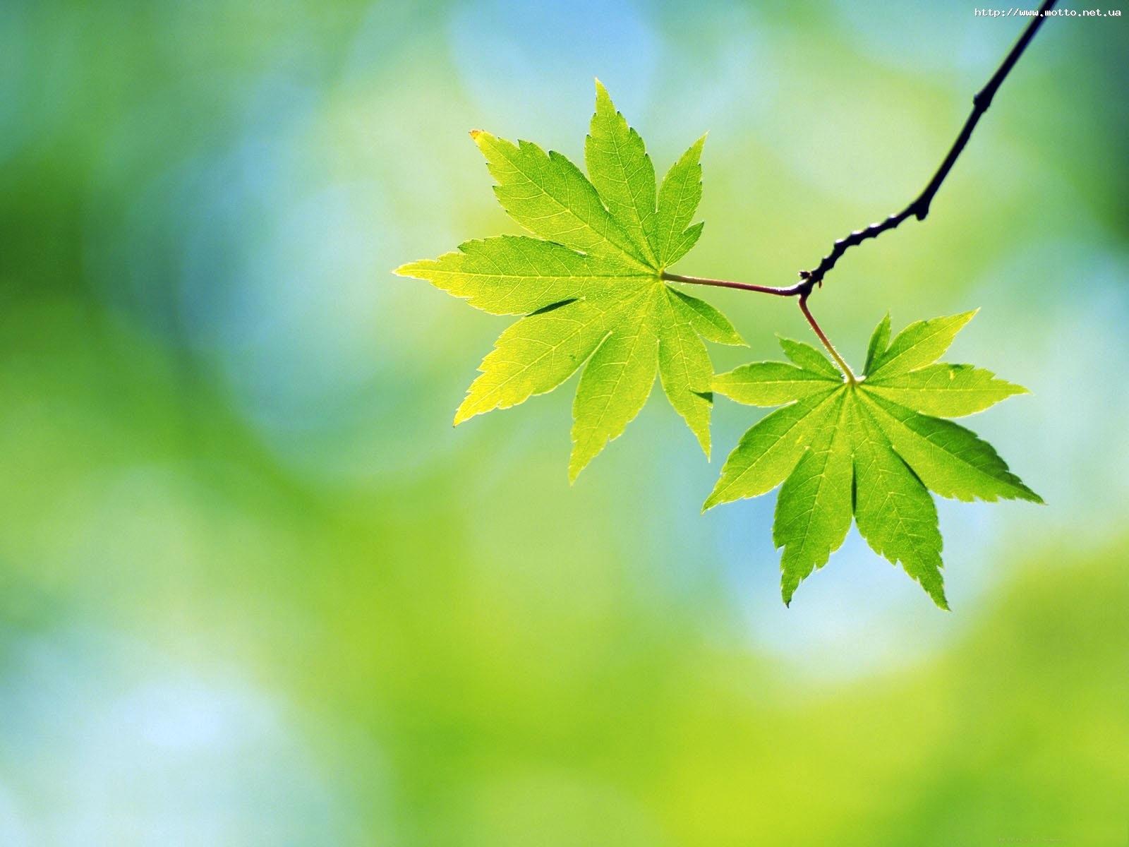 2822 скачать обои Растения, Листья - заставки и картинки бесплатно