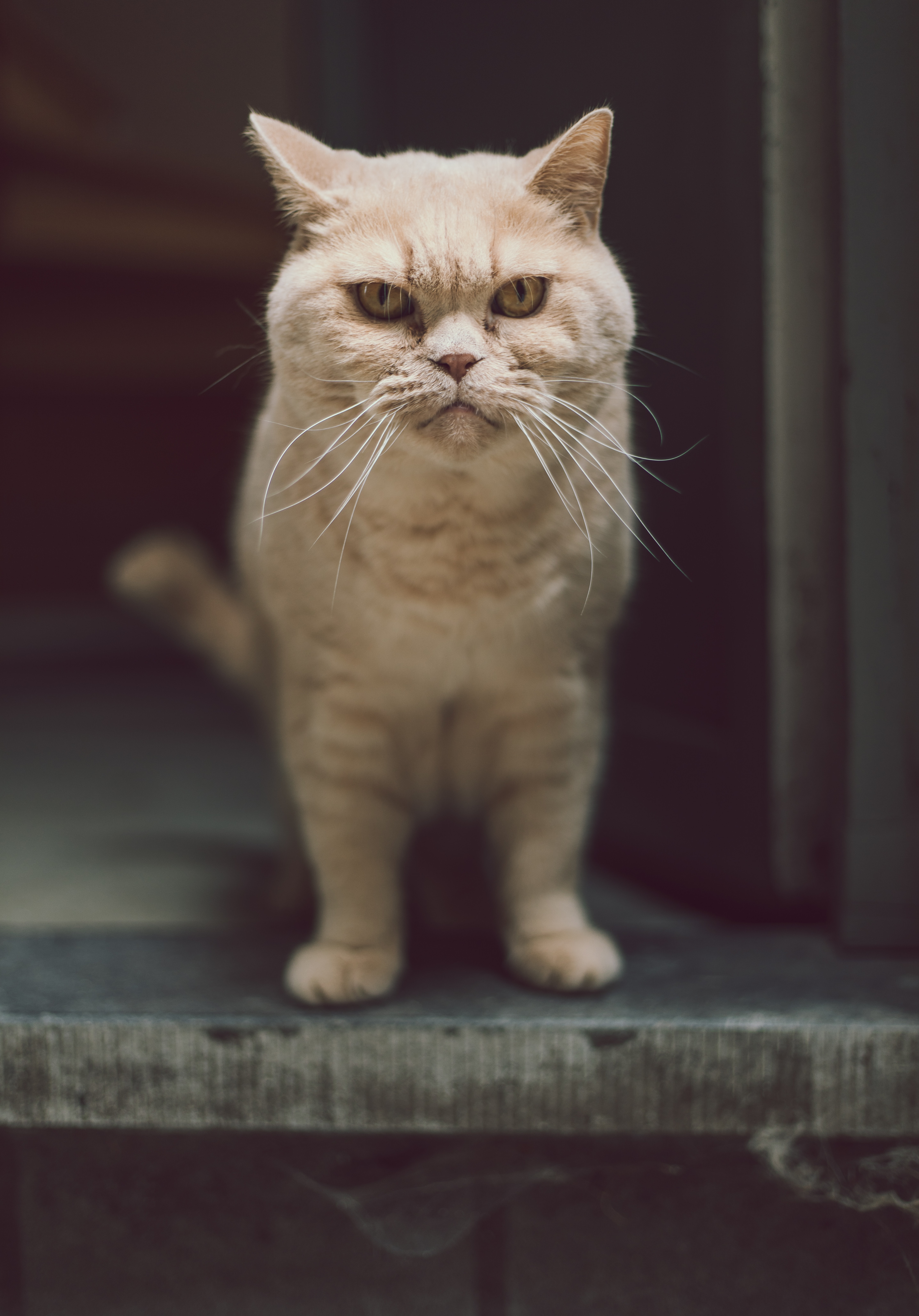 Download mobile wallpaper Serious, Cat, Animals, Opinion, Sight, Pet, Funny for free.
