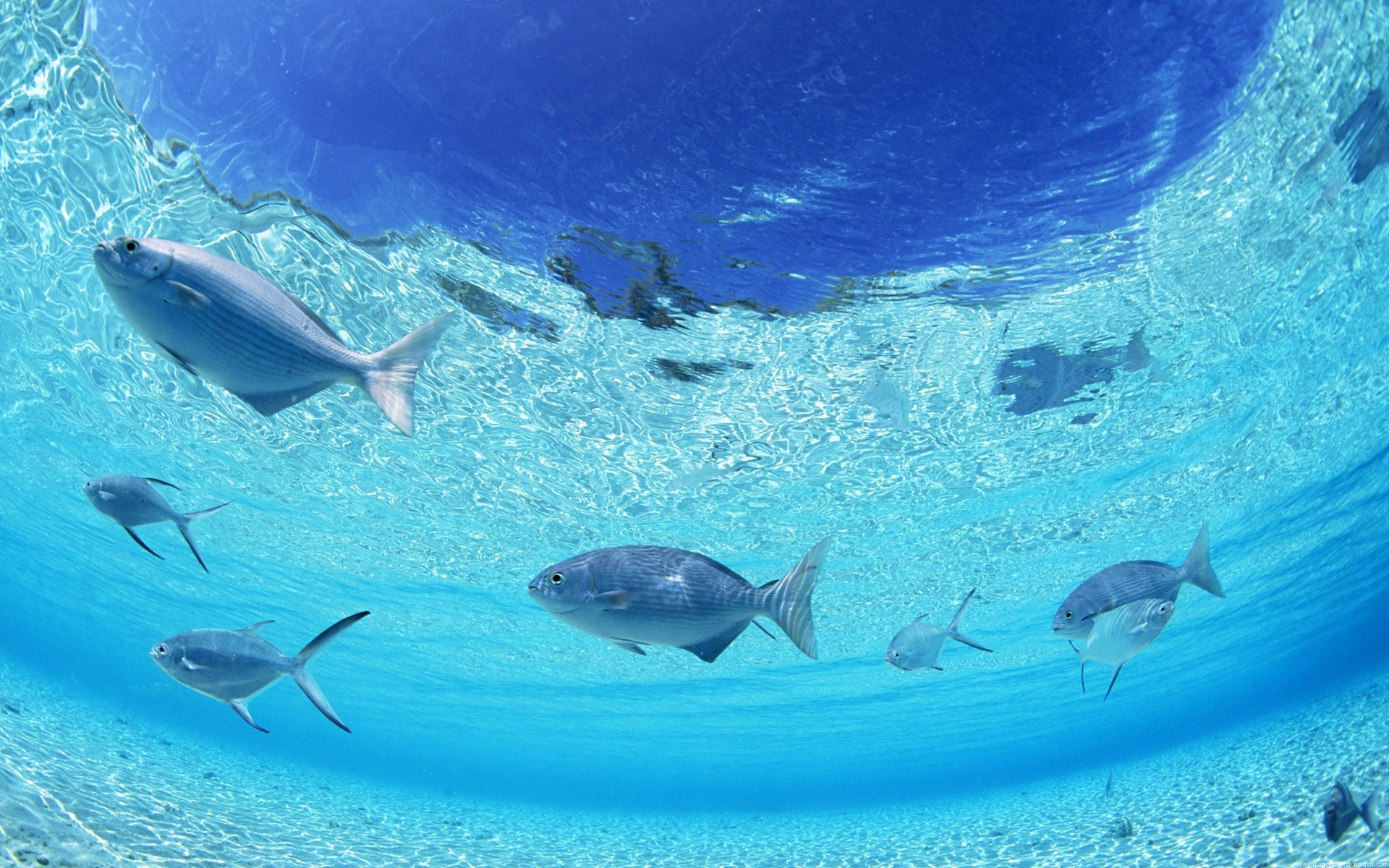 37528 download wallpaper Animals, Fishes screensavers and pictures for free