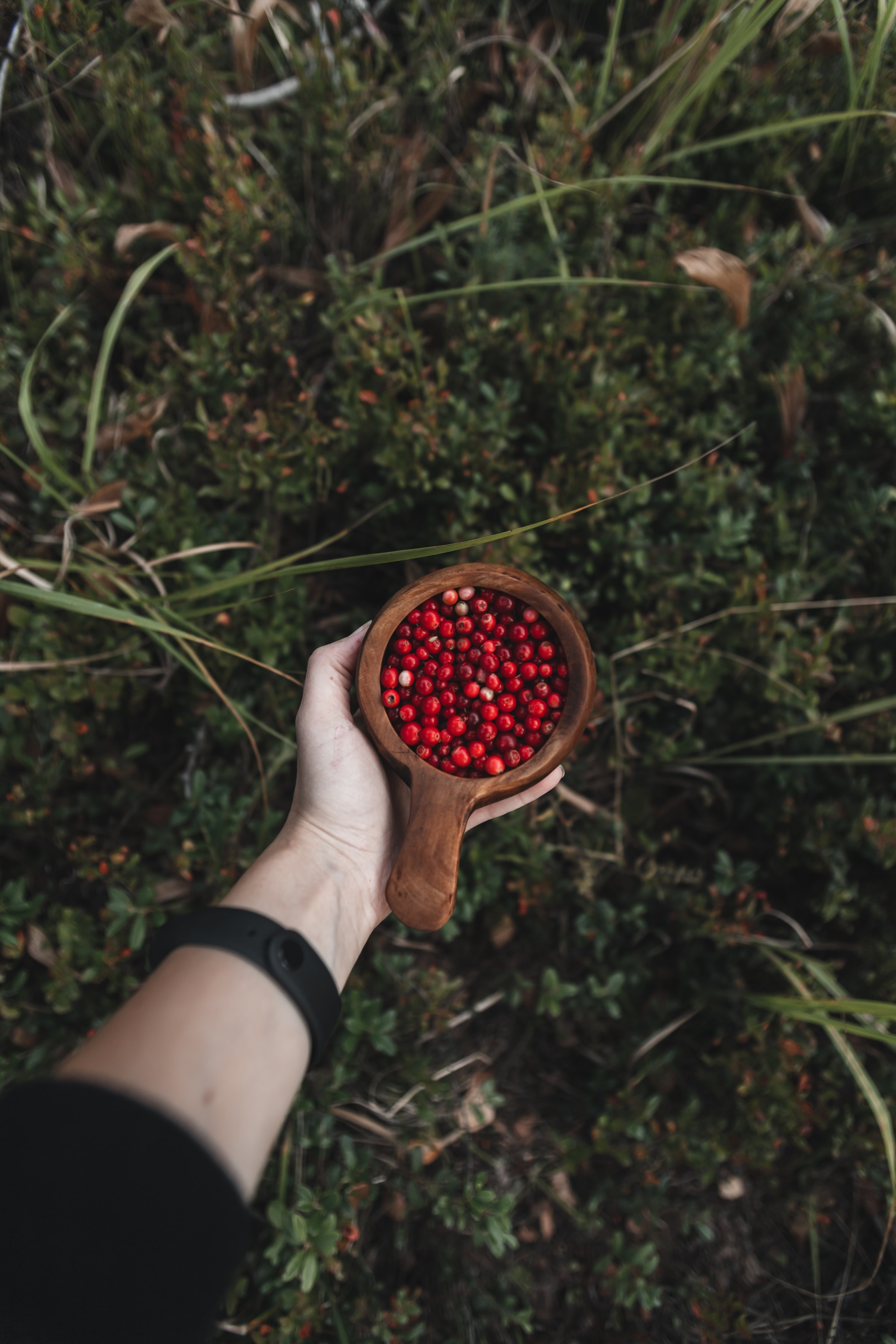 112872 download wallpaper Miscellanea, Miscellaneous, Lingonberry, Cowberry, Hand, Cup, Mug, Wood, Wooden, Berries screensavers and pictures for free