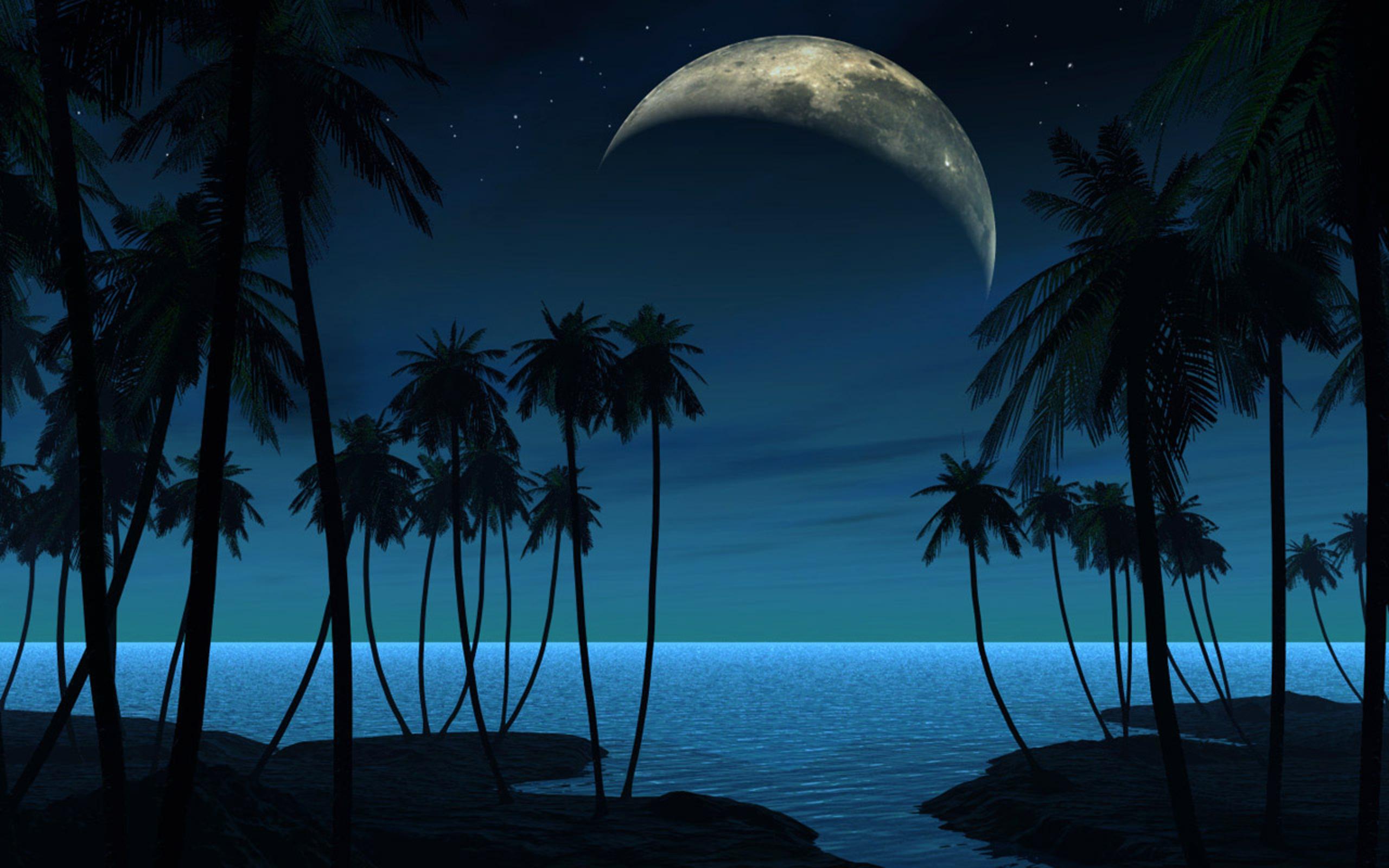 32502 скачать обои Пейзаж, Море, Ночь, Пальмы - заставки и картинки бесплатно
