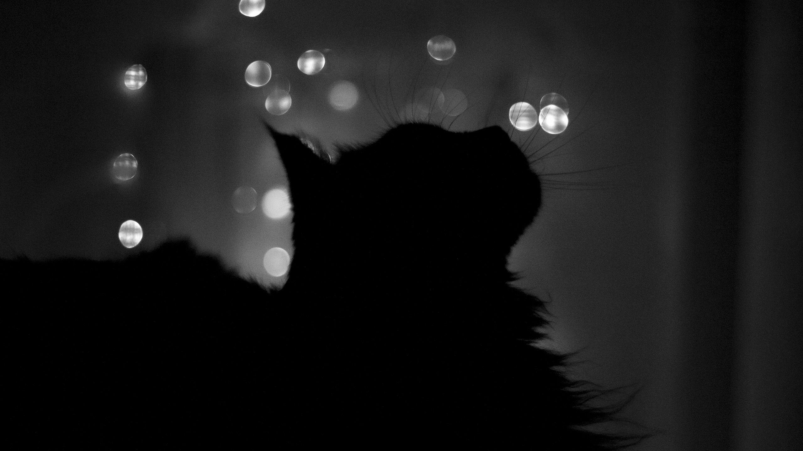 140474 Hintergrundbild herunterladen Züge, Blendung, Der Kater, Katze, Schatten, Bw, Chb, Funktionen - Bildschirmschoner und Bilder kostenlos