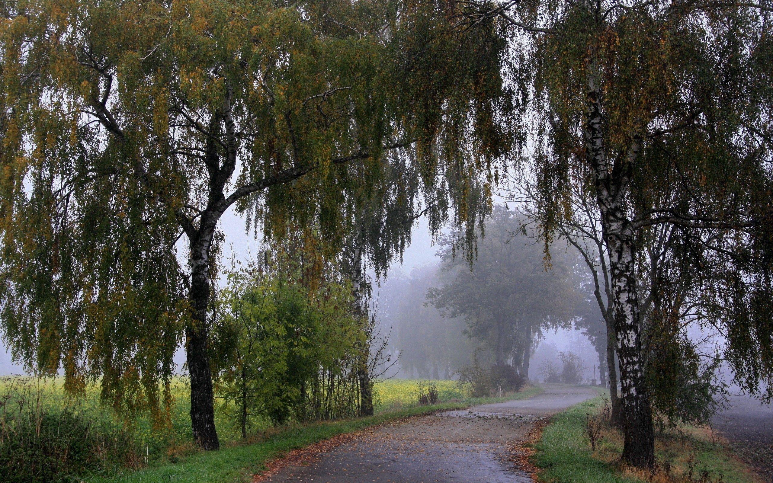 139590壁紙のダウンロード自然, 公園, 散歩, 草, 木-スクリーンセーバーと写真を無料で