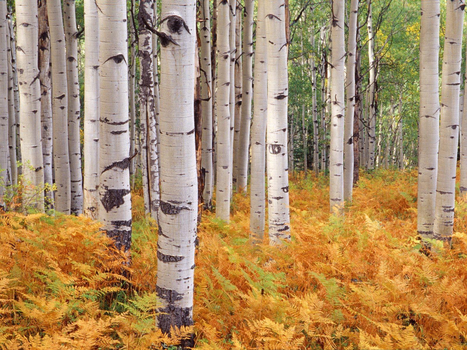 82124 скачать обои Осень, Природа, Деревья, Листья - заставки и картинки бесплатно