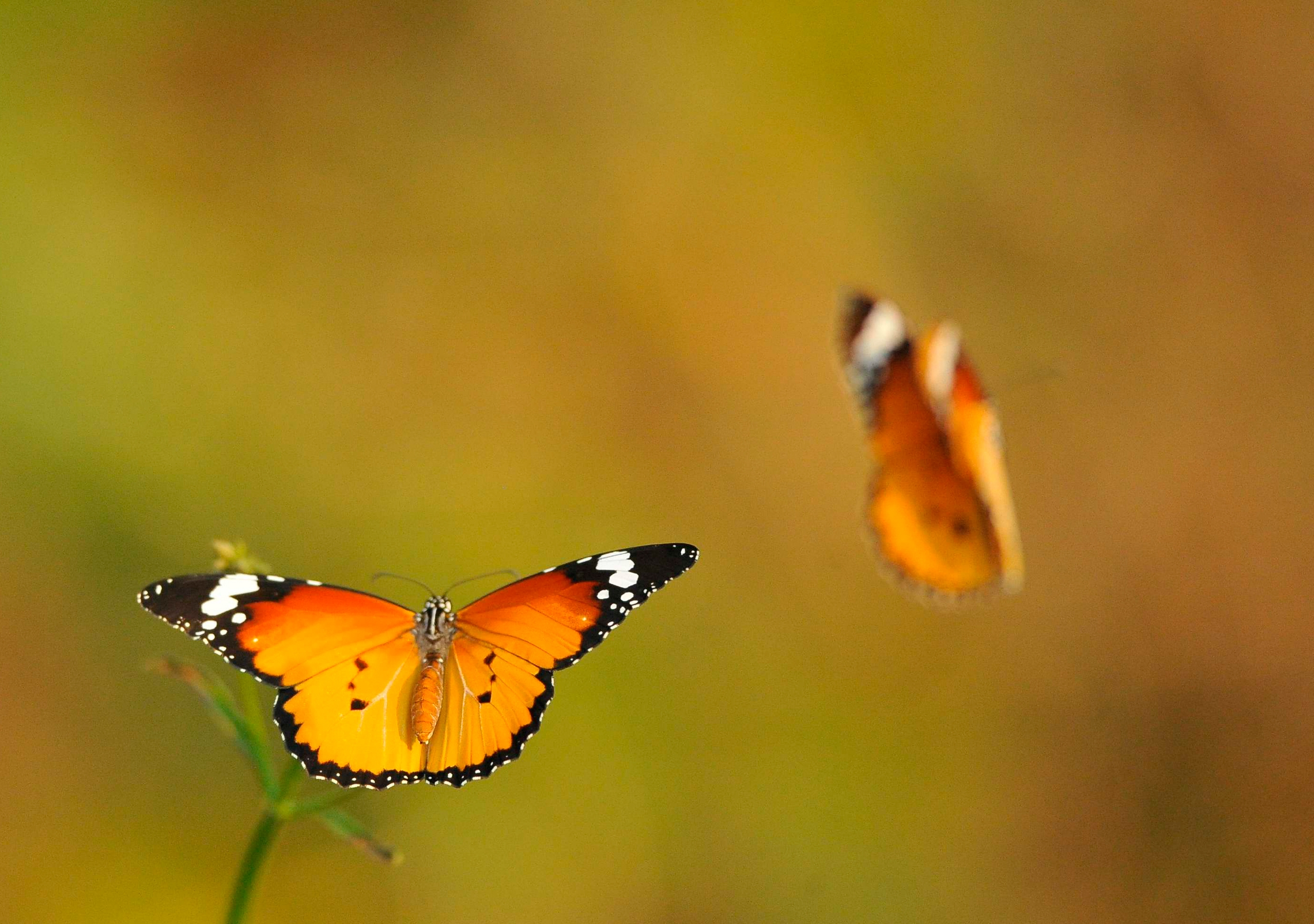 55793 Screensavers and Wallpapers Butterflies for phone. Download Macro, Butterflies, Greased, Smeared, Flight, Shine, Light pictures for free