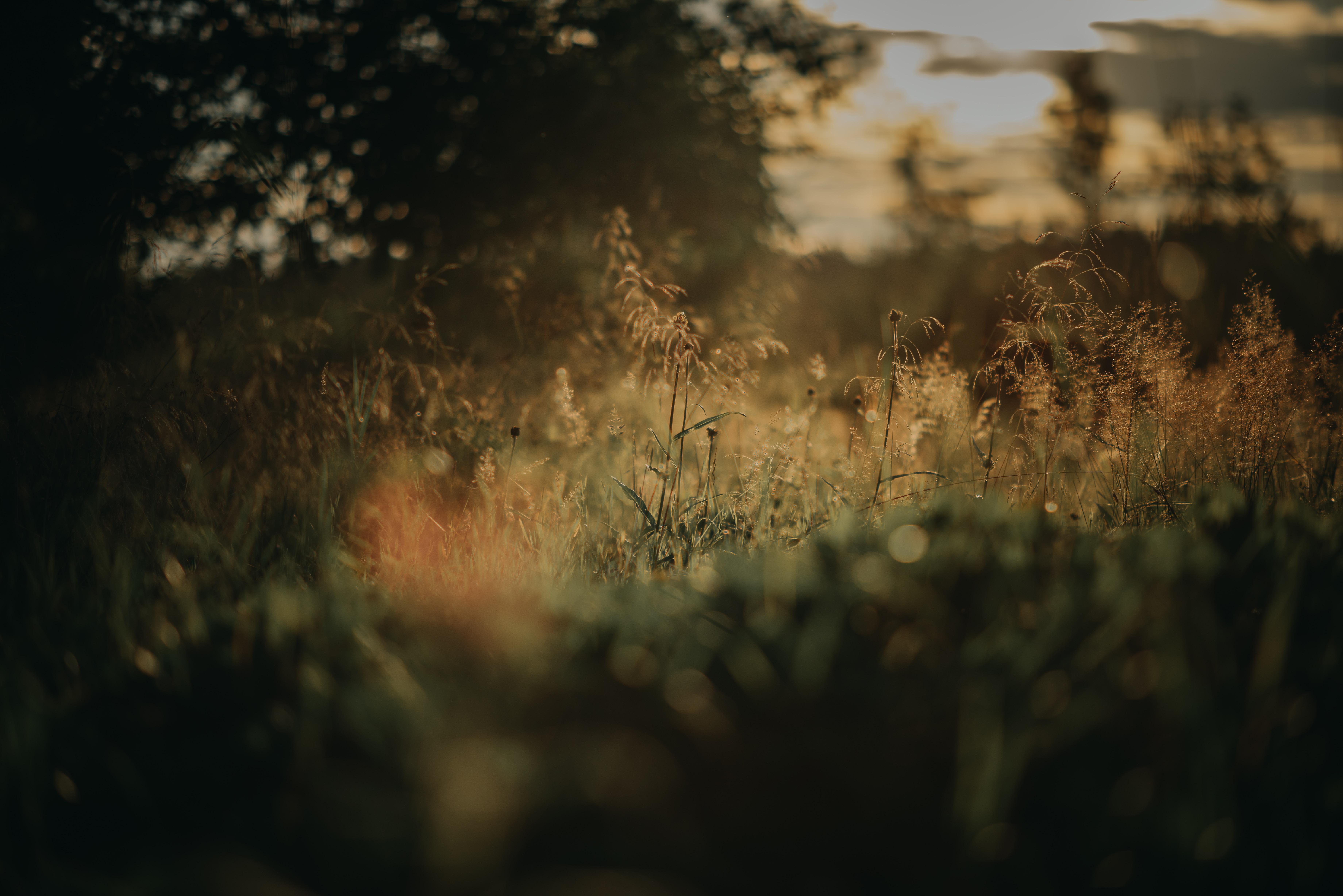 75038 скачать обои Трава, Растения, Размытость, Лужайка, Природа - заставки и картинки бесплатно