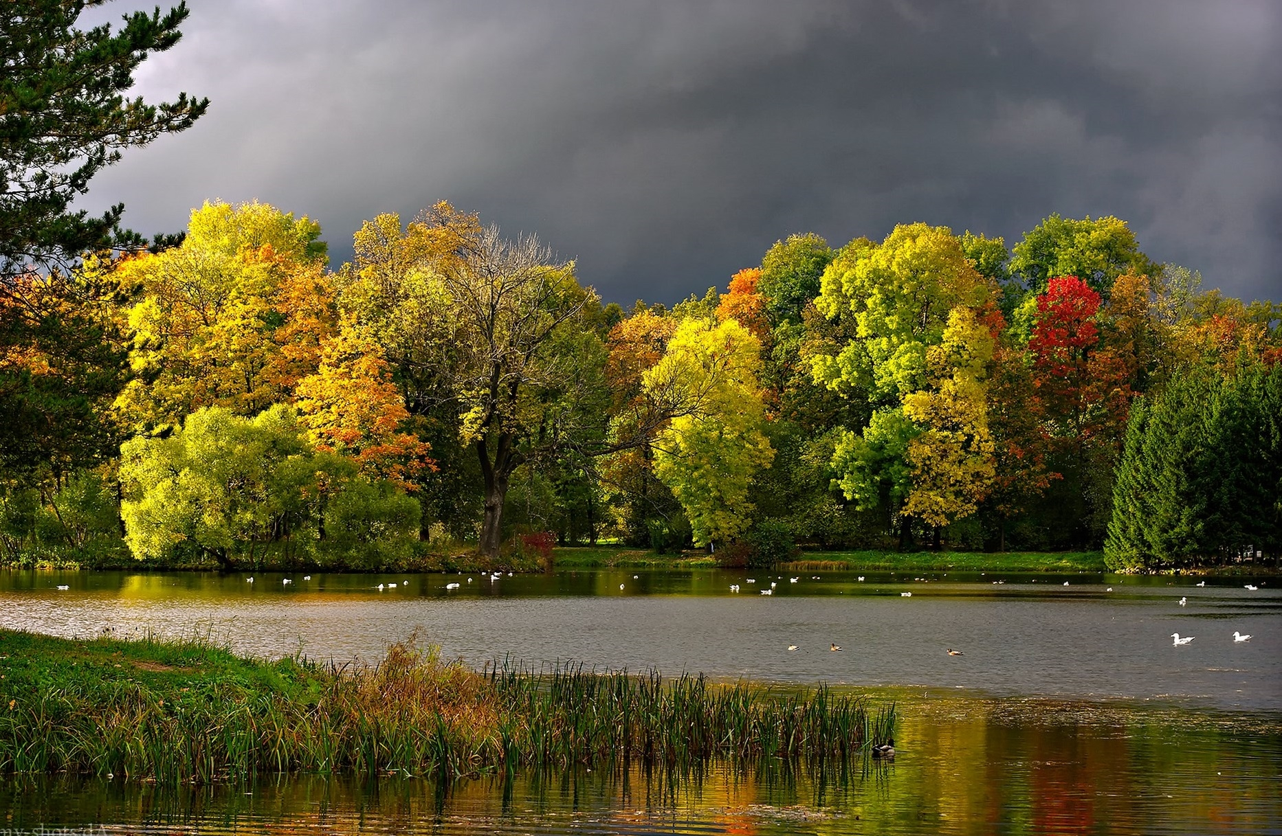 97474 download wallpaper Nature, Autumn, Clouds, Pond, Landscape, Seagulls screensavers and pictures for free
