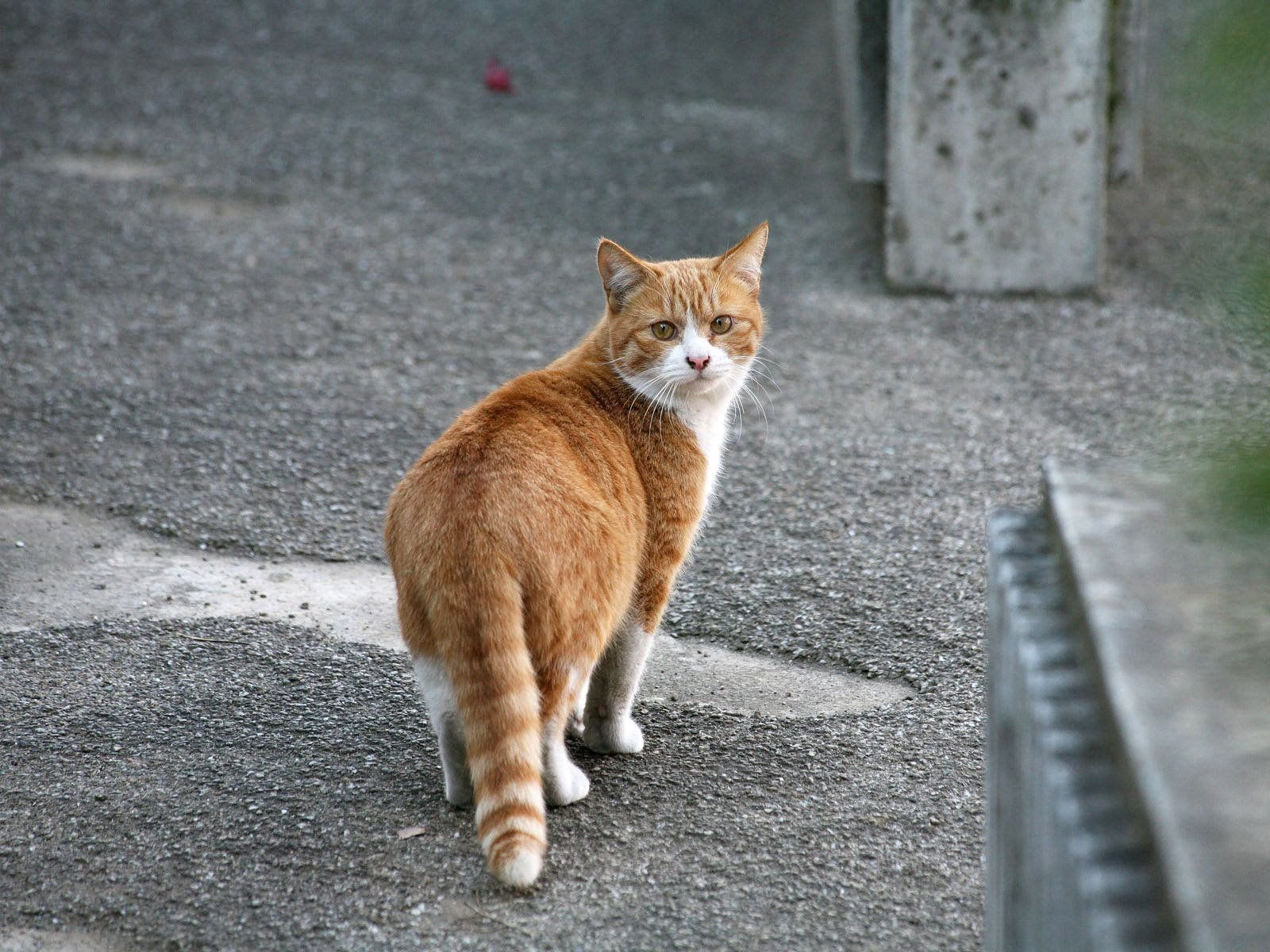 125073 download wallpaper Animals, Cat, Stroll, Spotted, Spotty, Street screensavers and pictures for free