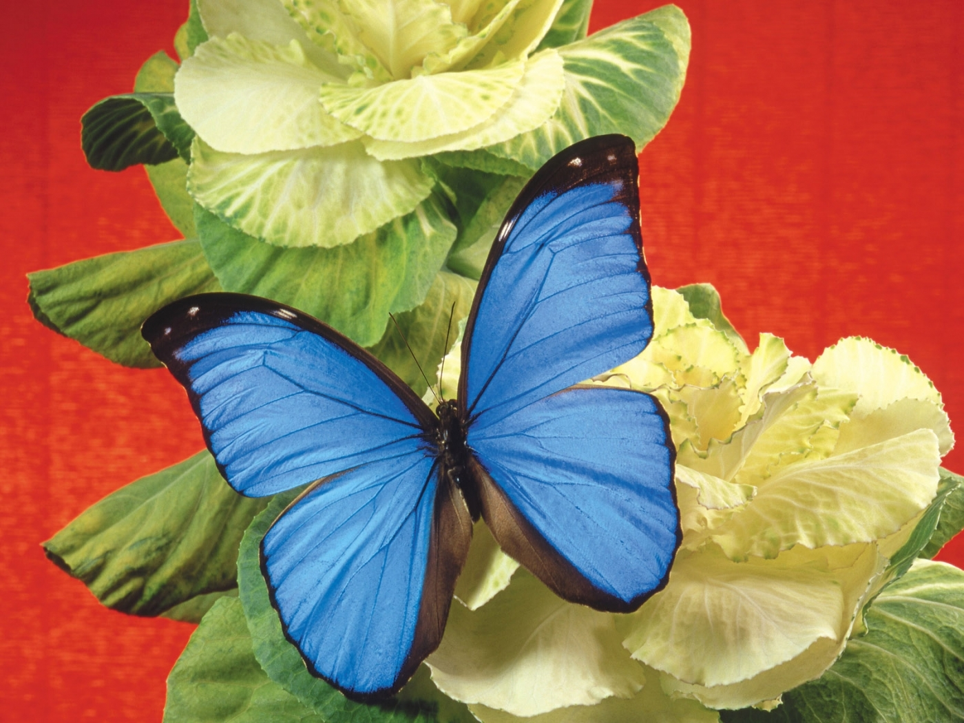 26199 download wallpaper Butterflies, Flowers, Insects screensavers and pictures for free