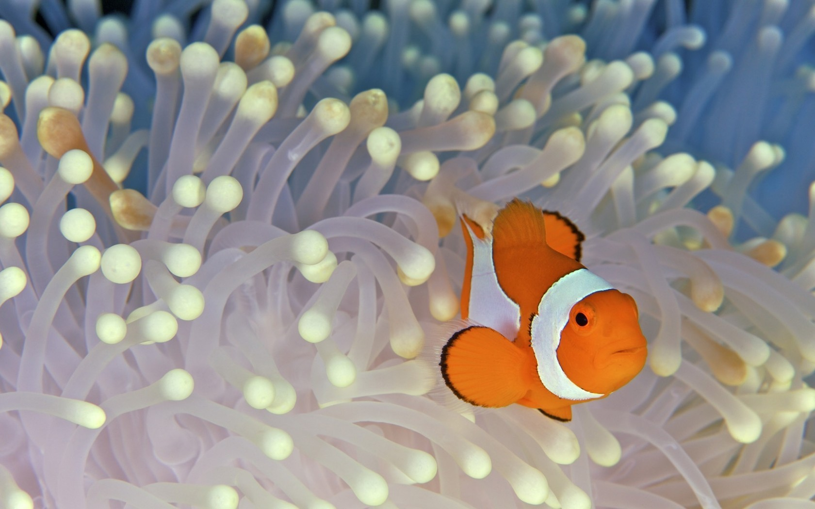 27702 download wallpaper Animals, Sea, Fishes screensavers and pictures for free
