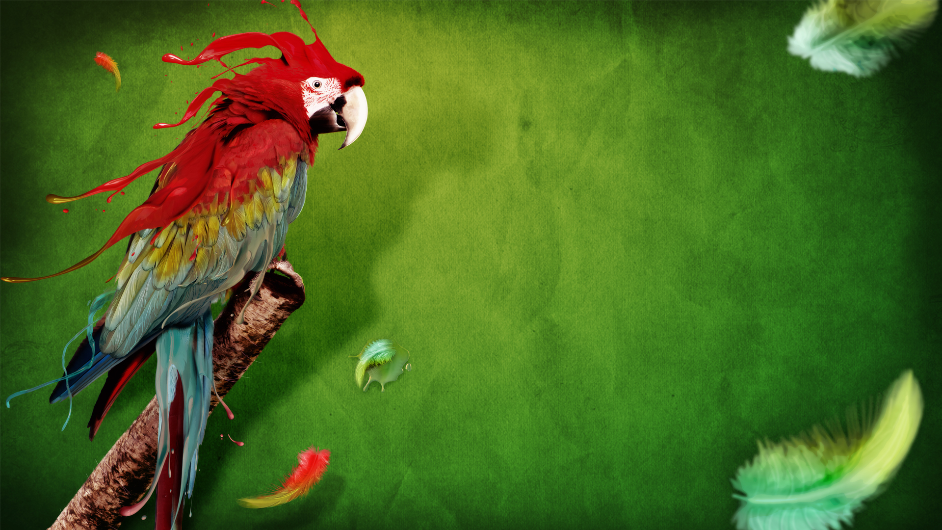 16622 download wallpaper Animals, Birds, Parrots screensavers and pictures for free