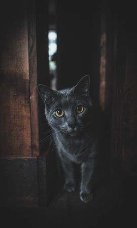 140040 download wallpaper Animals, Cat, Grey, Sight, Opinion, Pet, Dark screensavers and pictures for free
