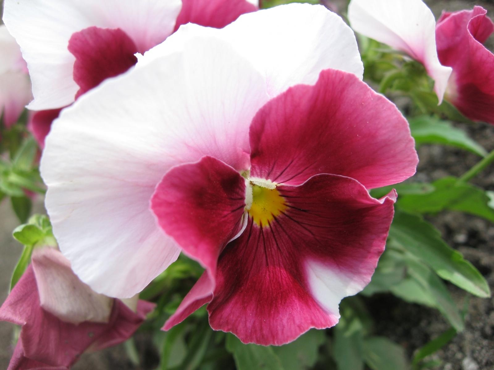 8040 скачать обои Растения, Цветы - заставки и картинки бесплатно