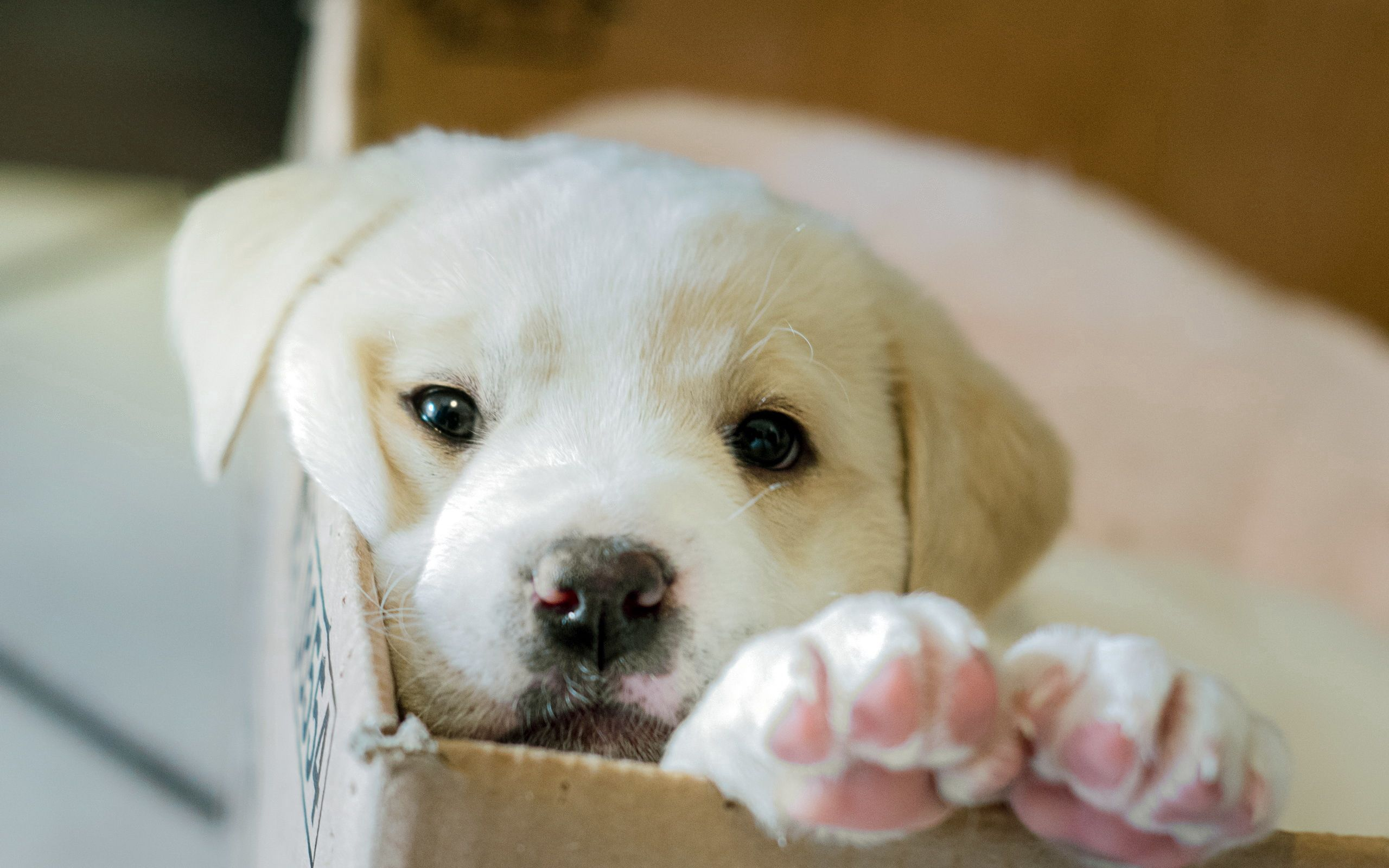 90024 download wallpaper Animals, Dog, Puppy, Box screensavers and pictures for free