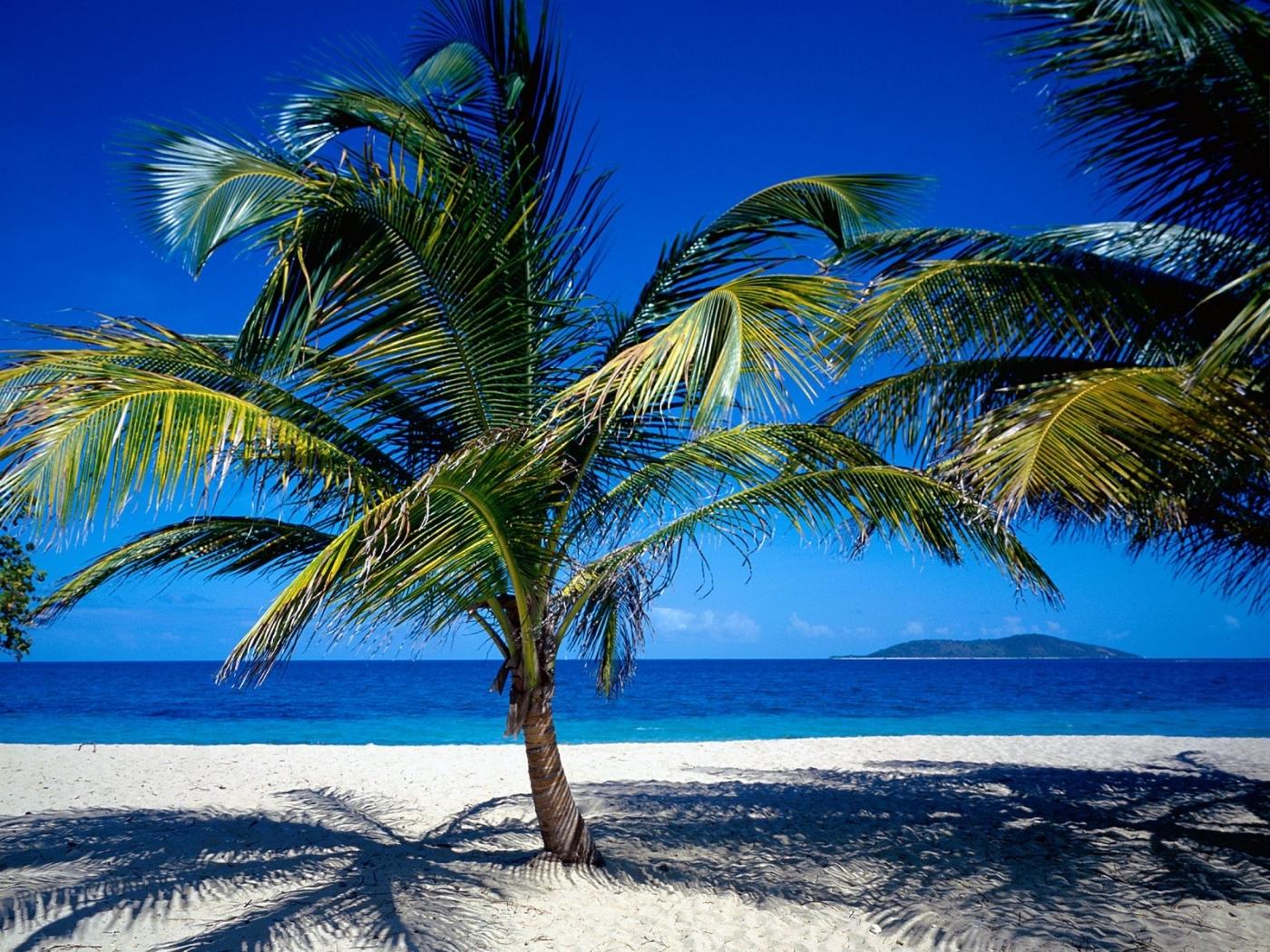 45752壁紙のダウンロード風景, 海, ビーチ, パームス-スクリーンセーバーと写真を無料で