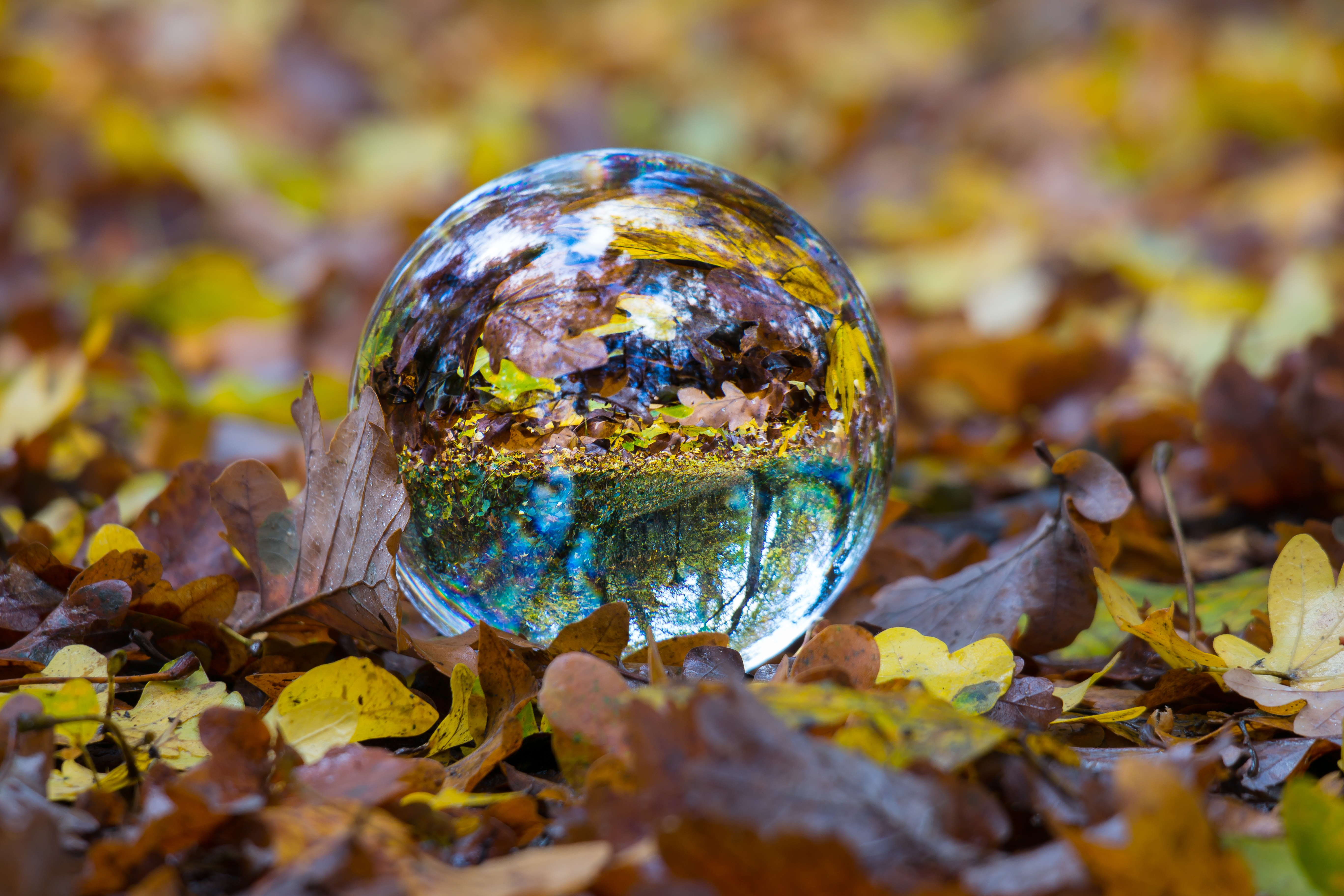 87109 Заставки и Обои Осень на телефон. Скачать Осень, Природа, Шар, Листва, Стеклянный, Сфера картинки бесплатно